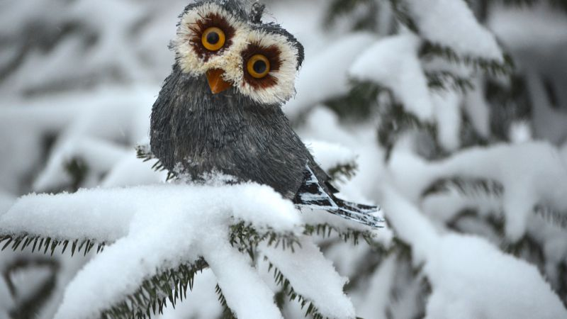 Portrait Wallpaper 3d Wallpaper Owl Pines Snow Cute Animals Funny Animals 4742