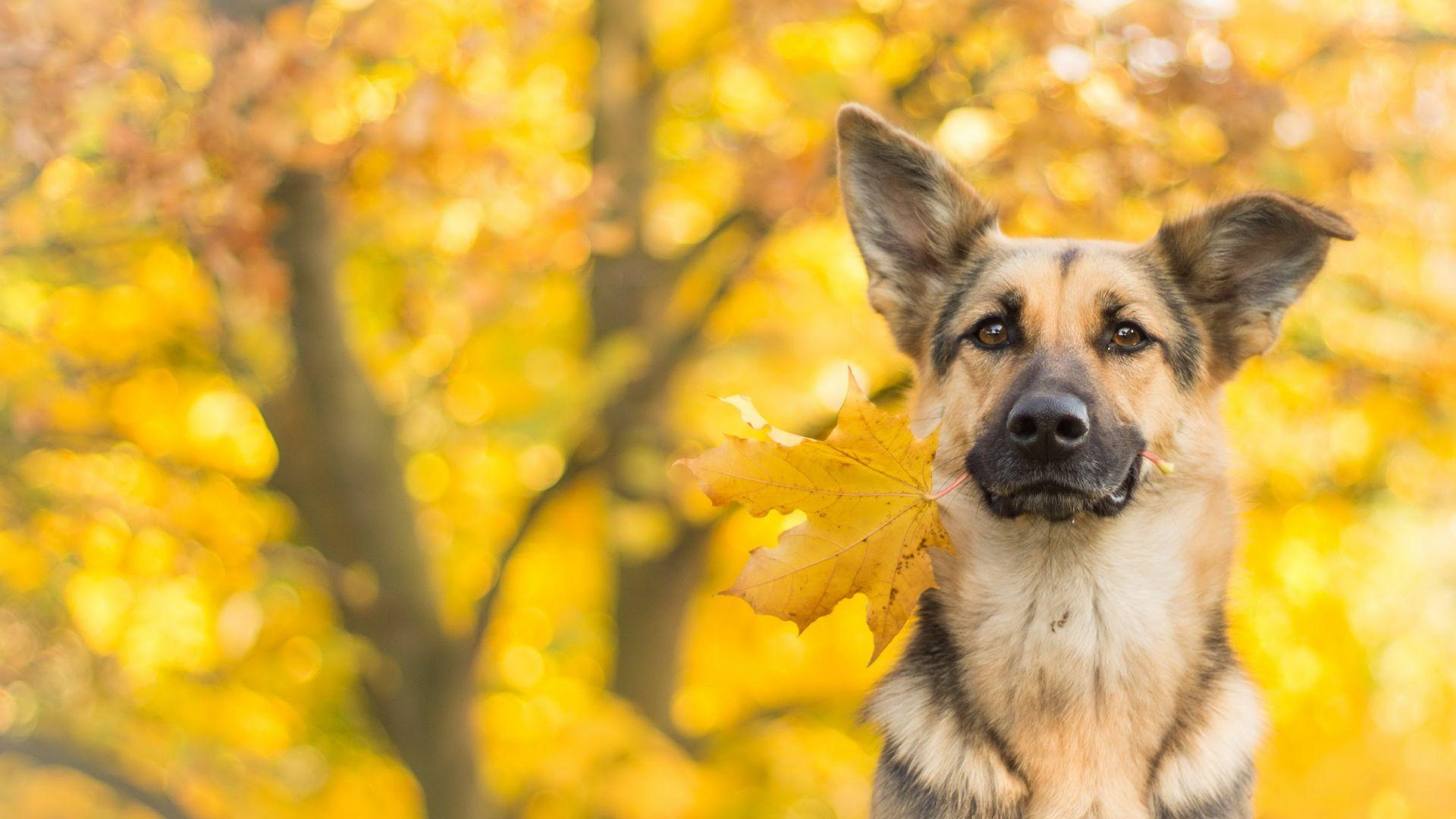 Fall Puppy Wallpaper Wallpaper Dog Cute Animals Leaves Autumn 4k Animals