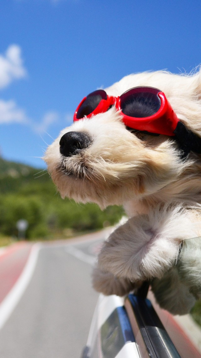 Animated Nature Wallpapers Free Download Wallpaper Dog Puppy Road Funny Glasses Hair Sky