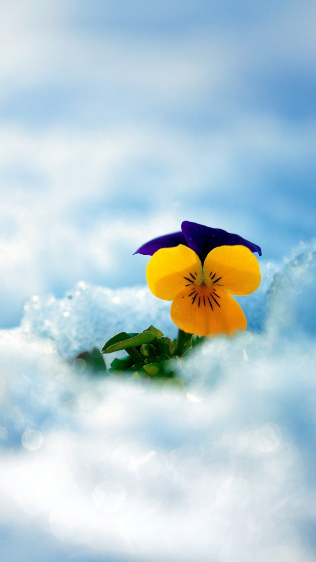 Minimalist Iphone X Wallpaper Wallpaper Flower Snow Winter 5k Nature 17104