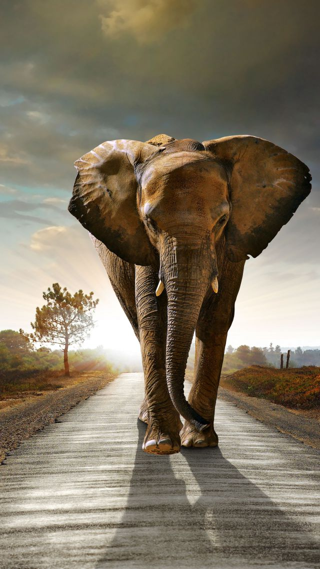 Quotes Iphone Wallpaper Pinterest Wallpaper Elephant Sunset Road Nature Animals 4501