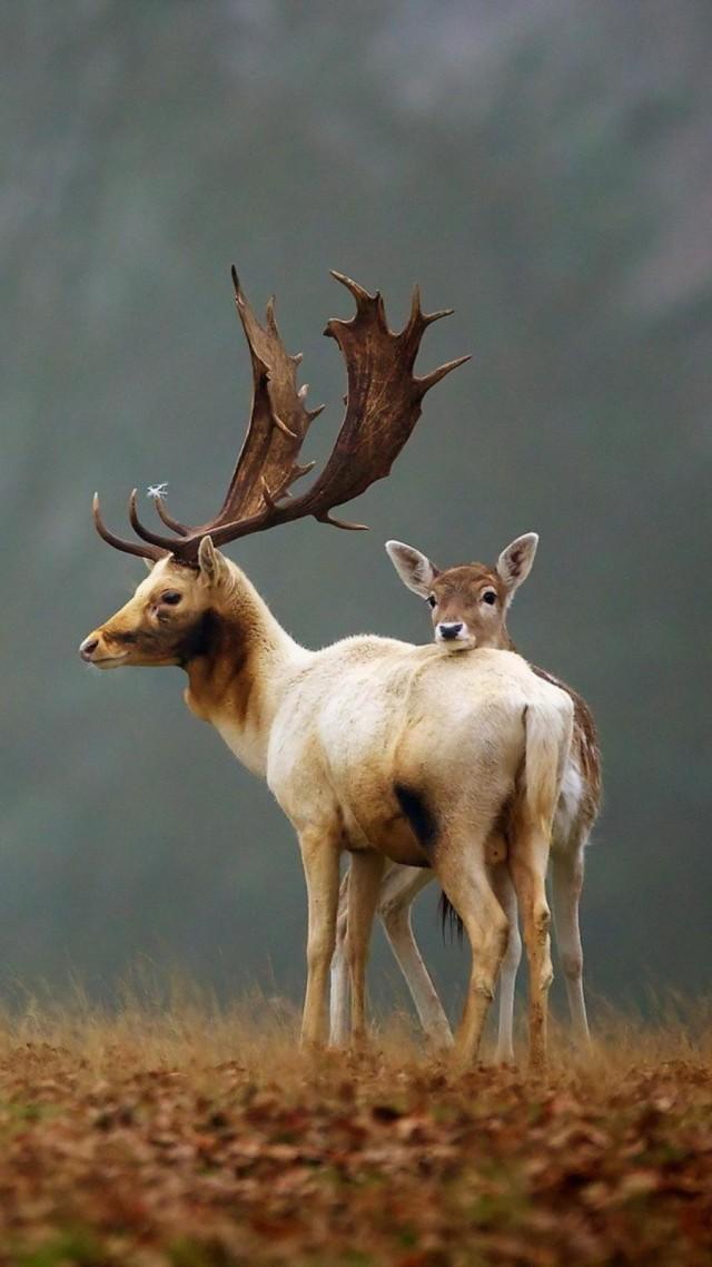 Most Beautiful Wallpapers Of Animals Wallpaper Deer Meadow Fog Cute Animals Animals 4659