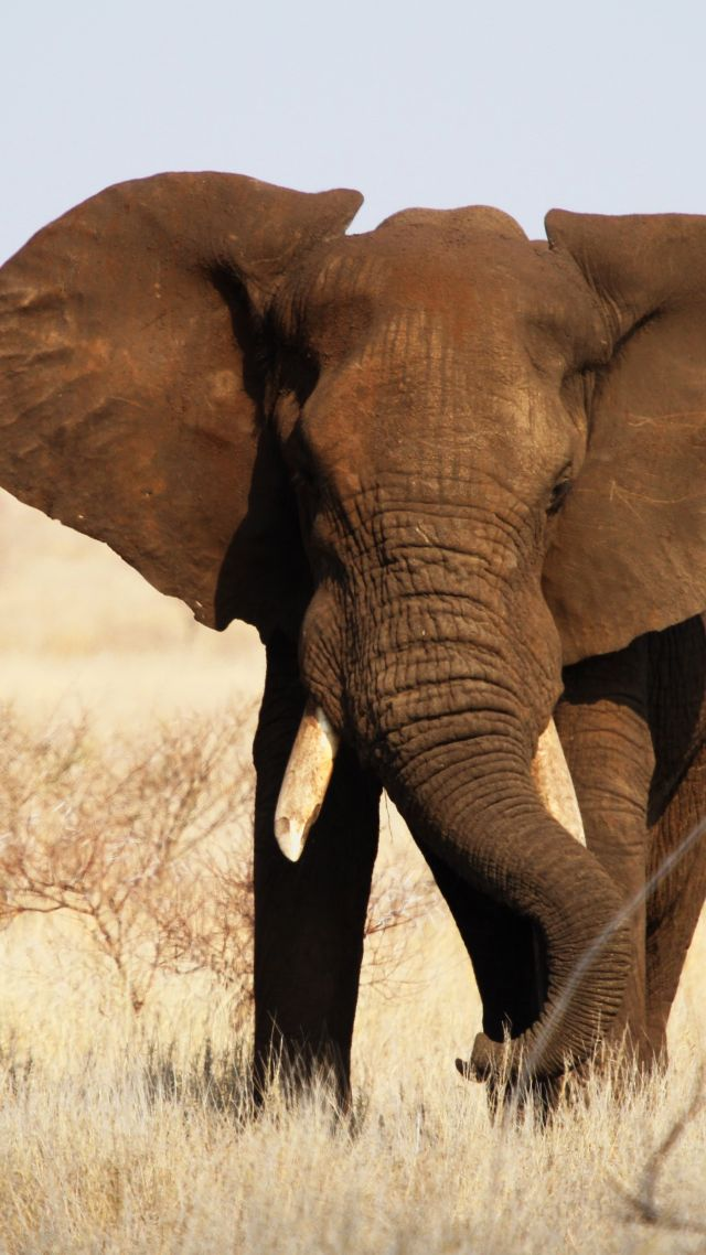 Cute Wallpapers Of All The Animals Wallpaper Elephant Kruger National Park Africa Wildlife