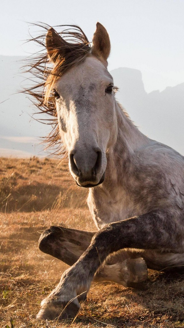 Iphone Wallpaper Cute Quotes Wallpaper Horse Sehlabathebe National Park Lesotho