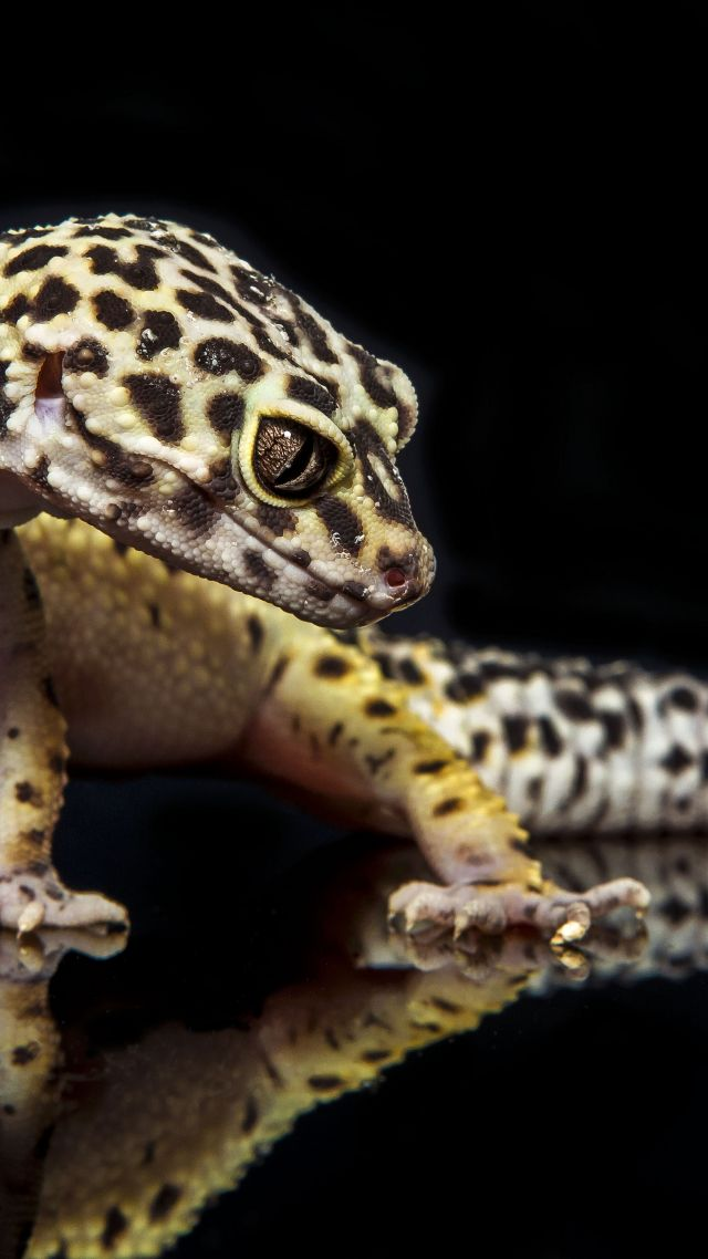 Black Desert Hd Wallpaper Wallpaper Gecko Reptile Lizard Caterpillar Close Up