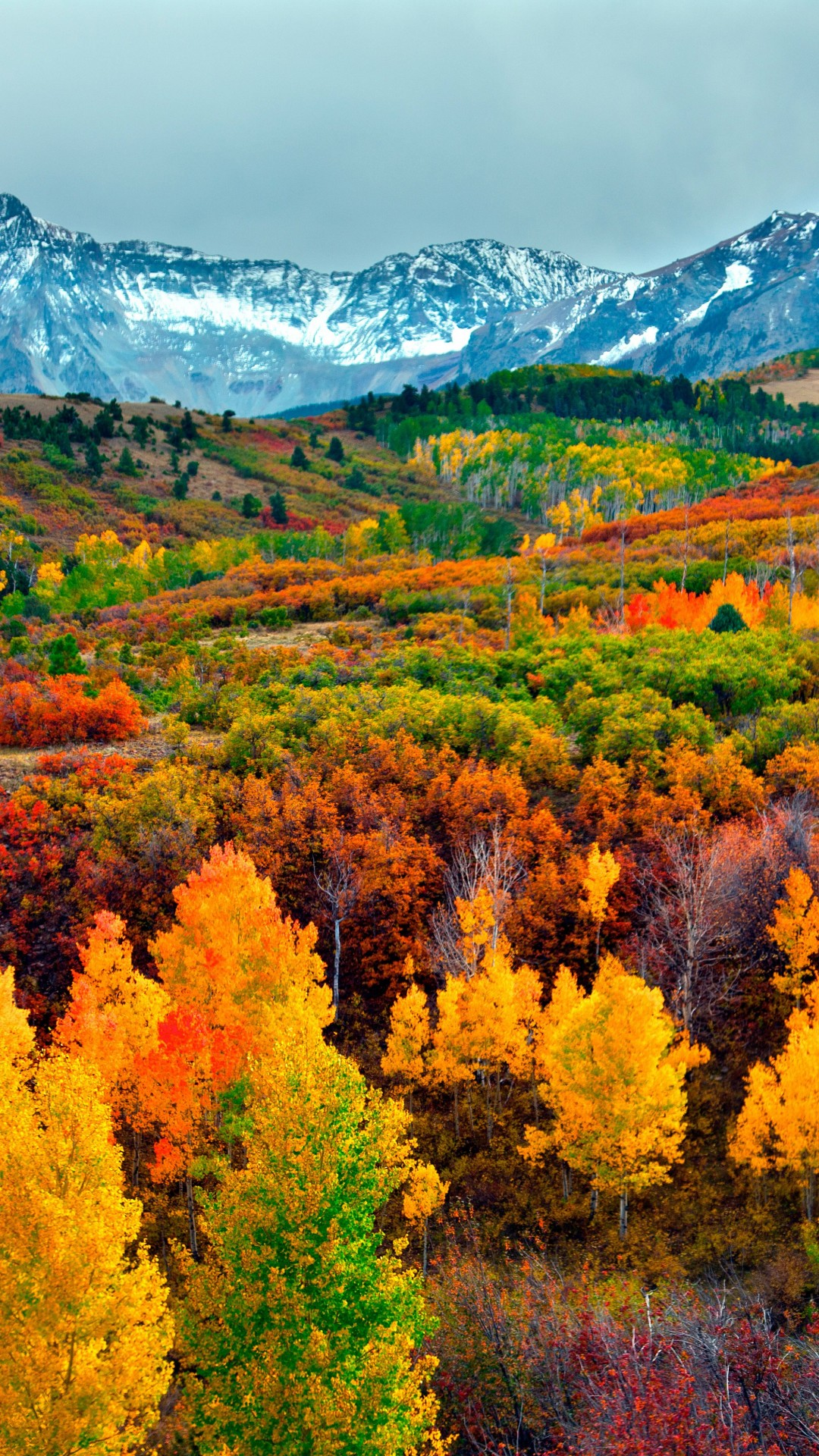 Fall Leaves Pictures Wallpaper Wallpaper Autumn Forest Mountain 5k Nature 16242