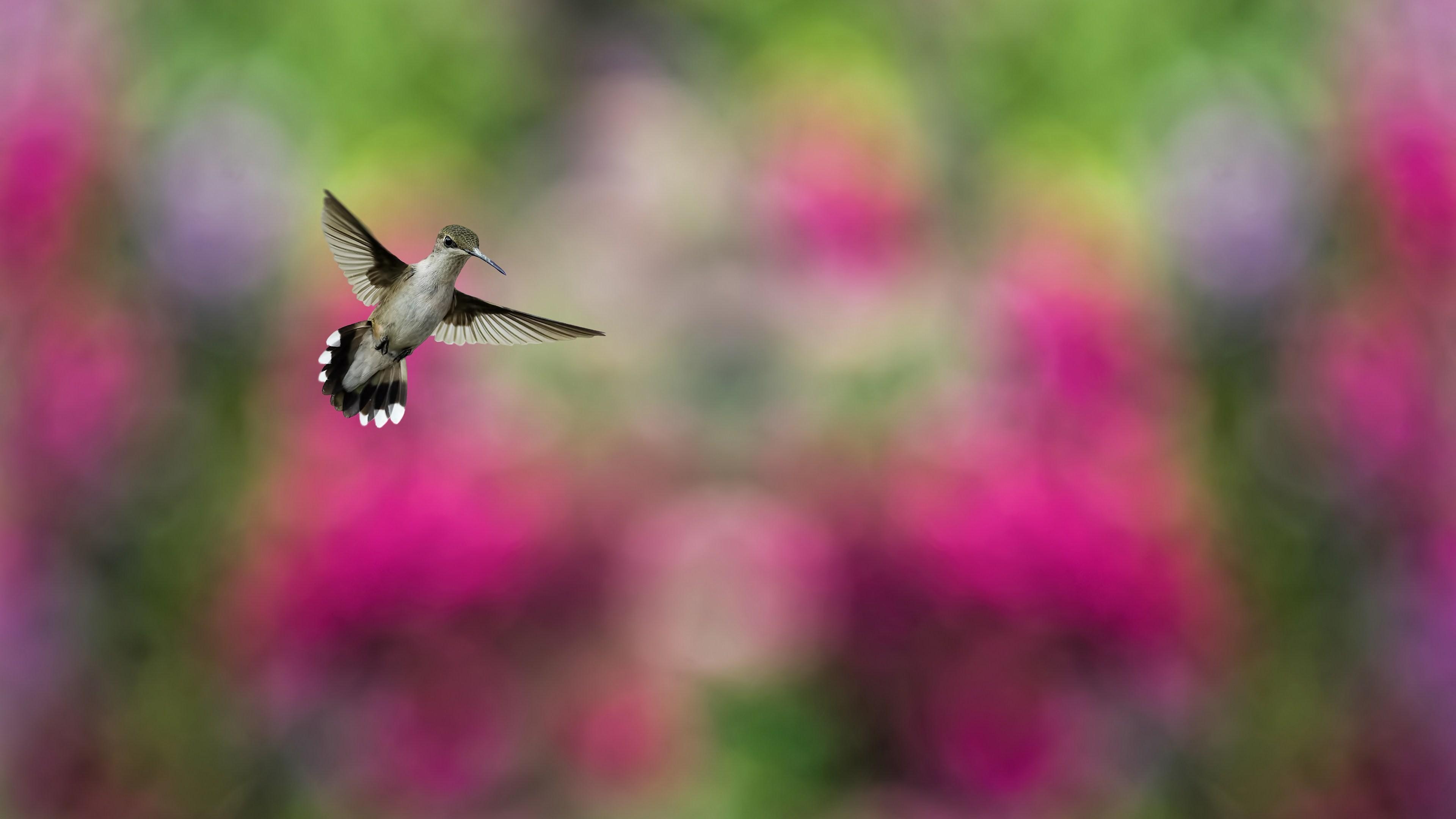 3d Eagle Wallpaper Wallpaper Bird Hummingbird Humming Bird Colorful Blur