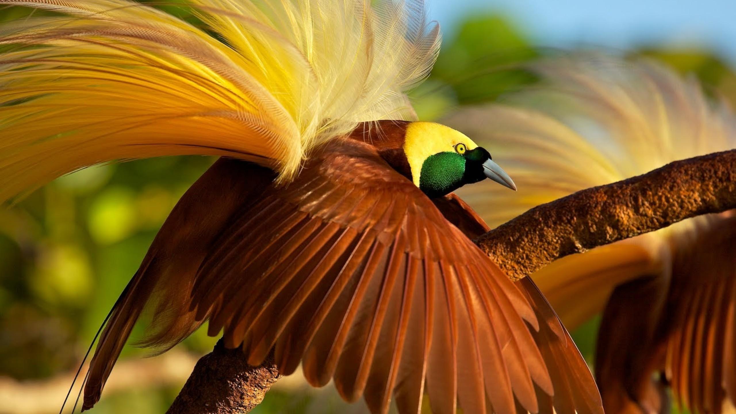 Blur 3d Wallpaper Wallpaper Bird Of Paradise Bird 4k Animals 15002