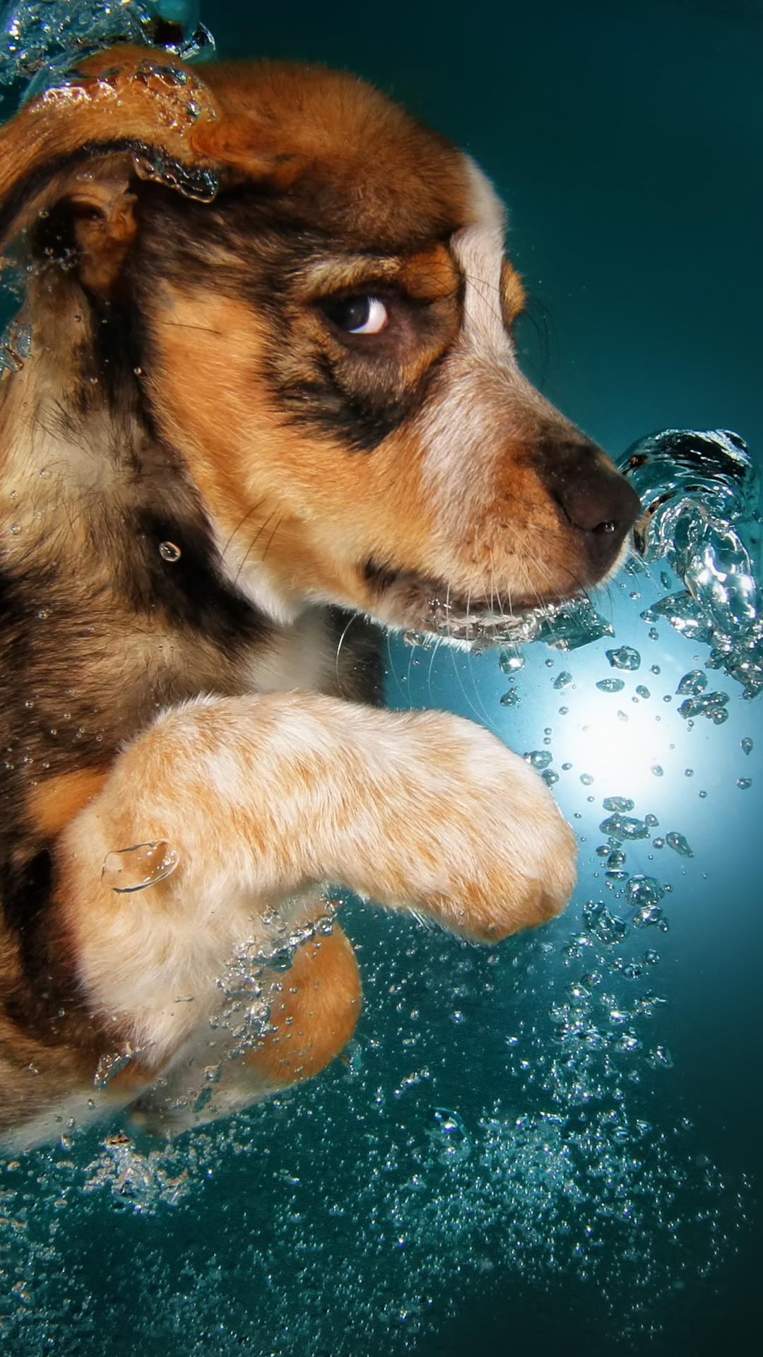 Cute Husky Wallpaper Hd Wallpaper Border Collie Dog Underwater Cute Animals