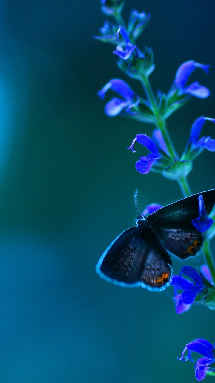 Into The Wild Quotes Wallpaper Wallpaper Butterfly Flowers Blue Animals 6026