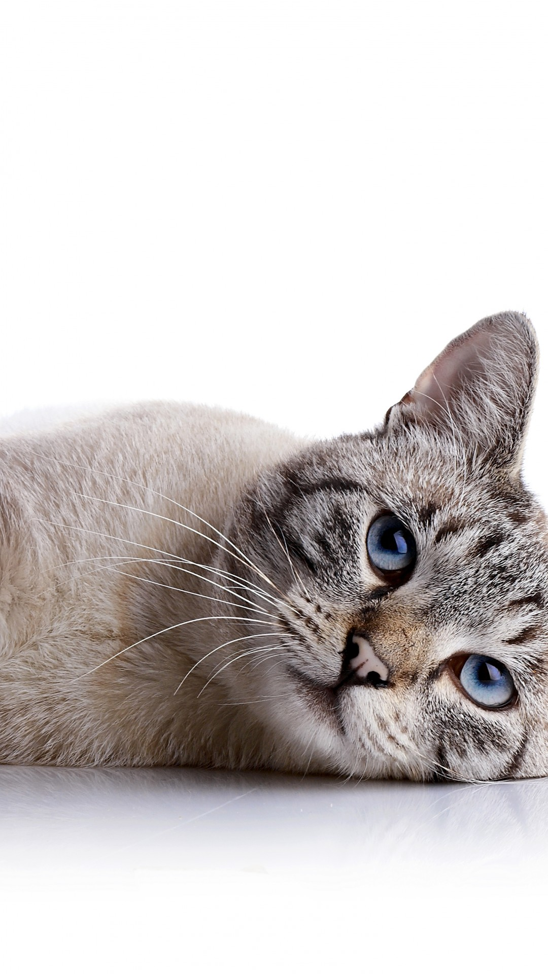 Cute Cat Hd Wallpaper Download Wallpaper Cat Cute Animals 8k Animals 15371