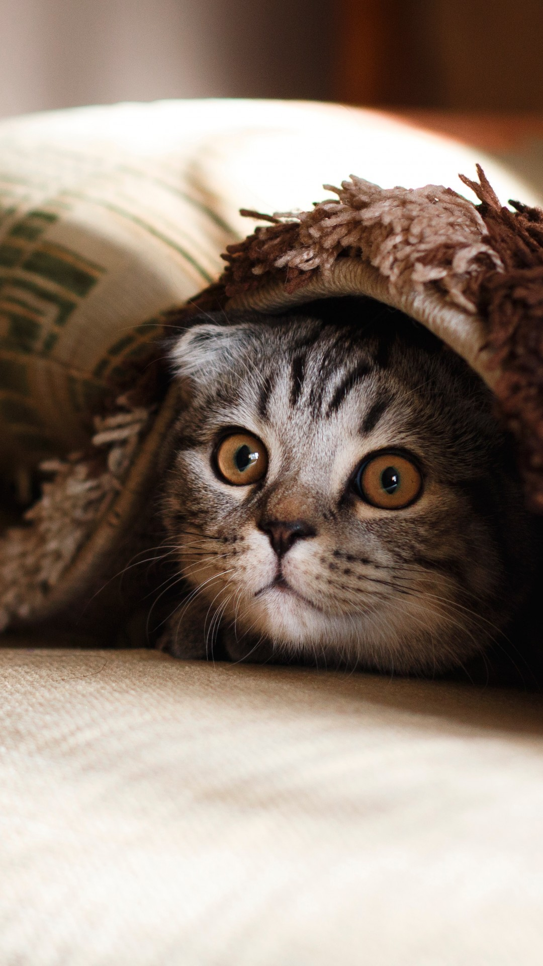 Cute Quotes Wallpapers Pinterest Wallpaper Cat Funny Animals 4k Animals 18888