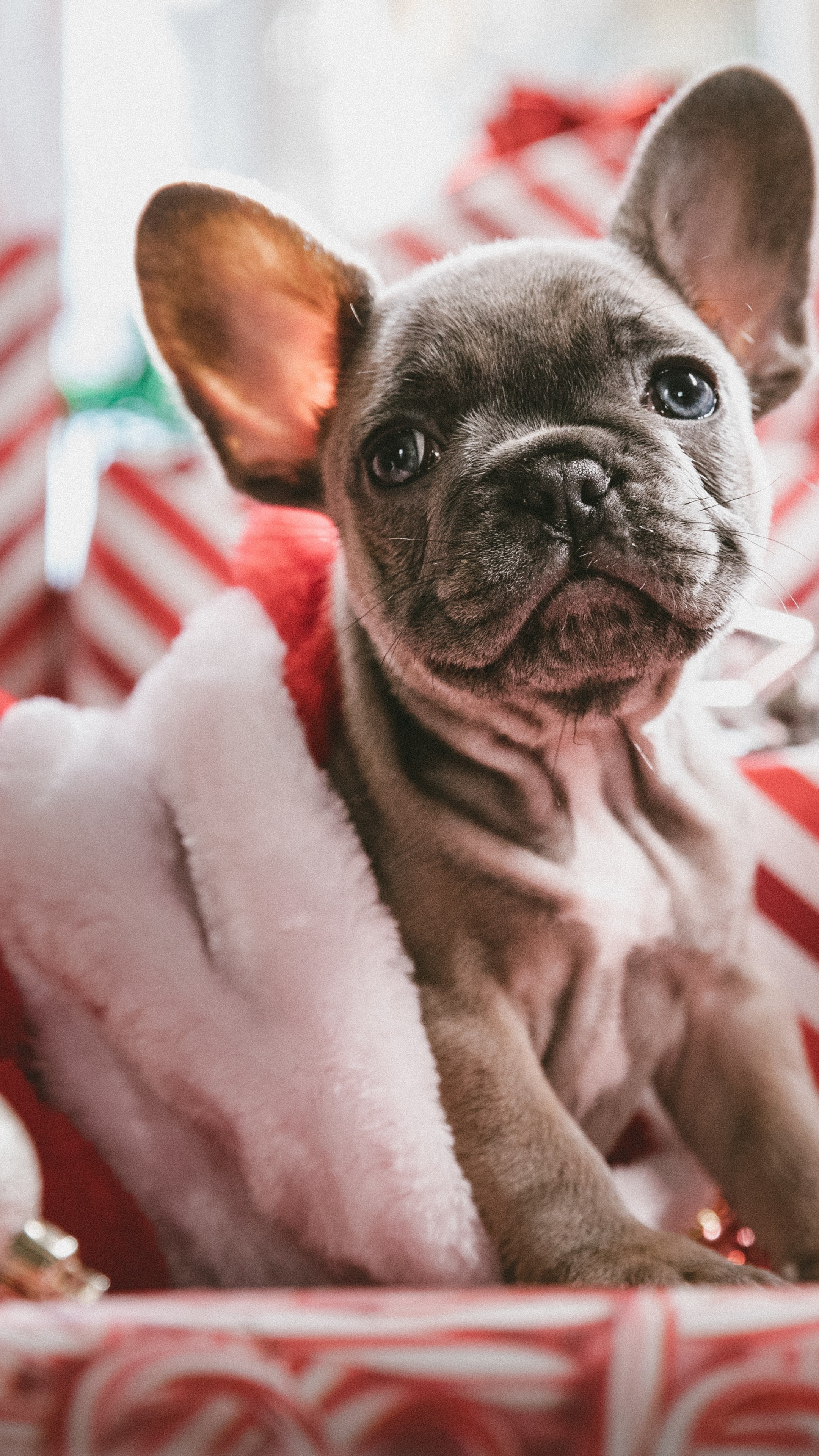 Cute Quotes Wallpapers Pinterest Wallpaper Christmas New Year Puppy Cute Animals 5k