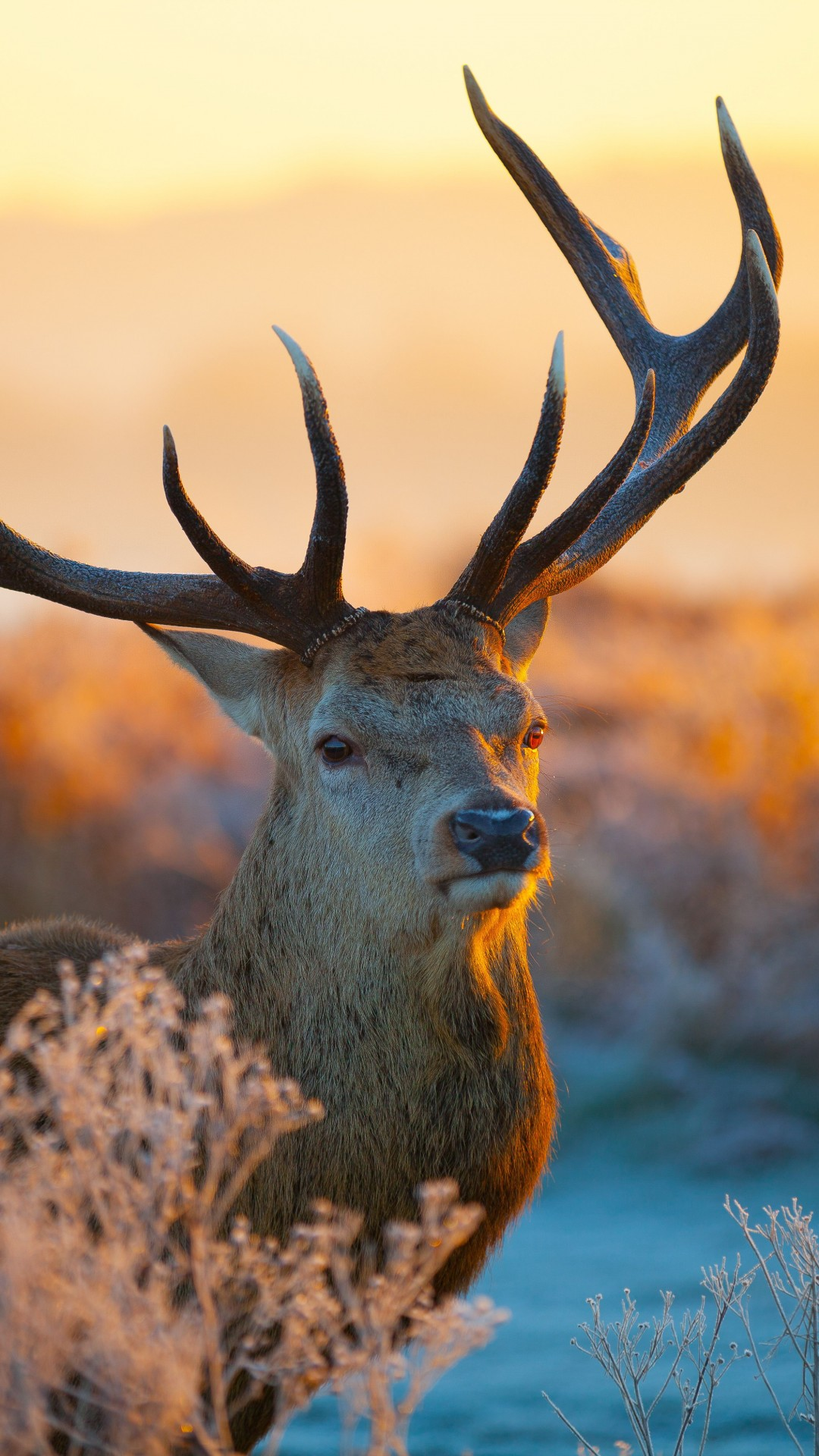 Images Of Nature Wallpaper With Quotes Wallpaper Deer Savanna Sunset Cute Animals Animals 4480