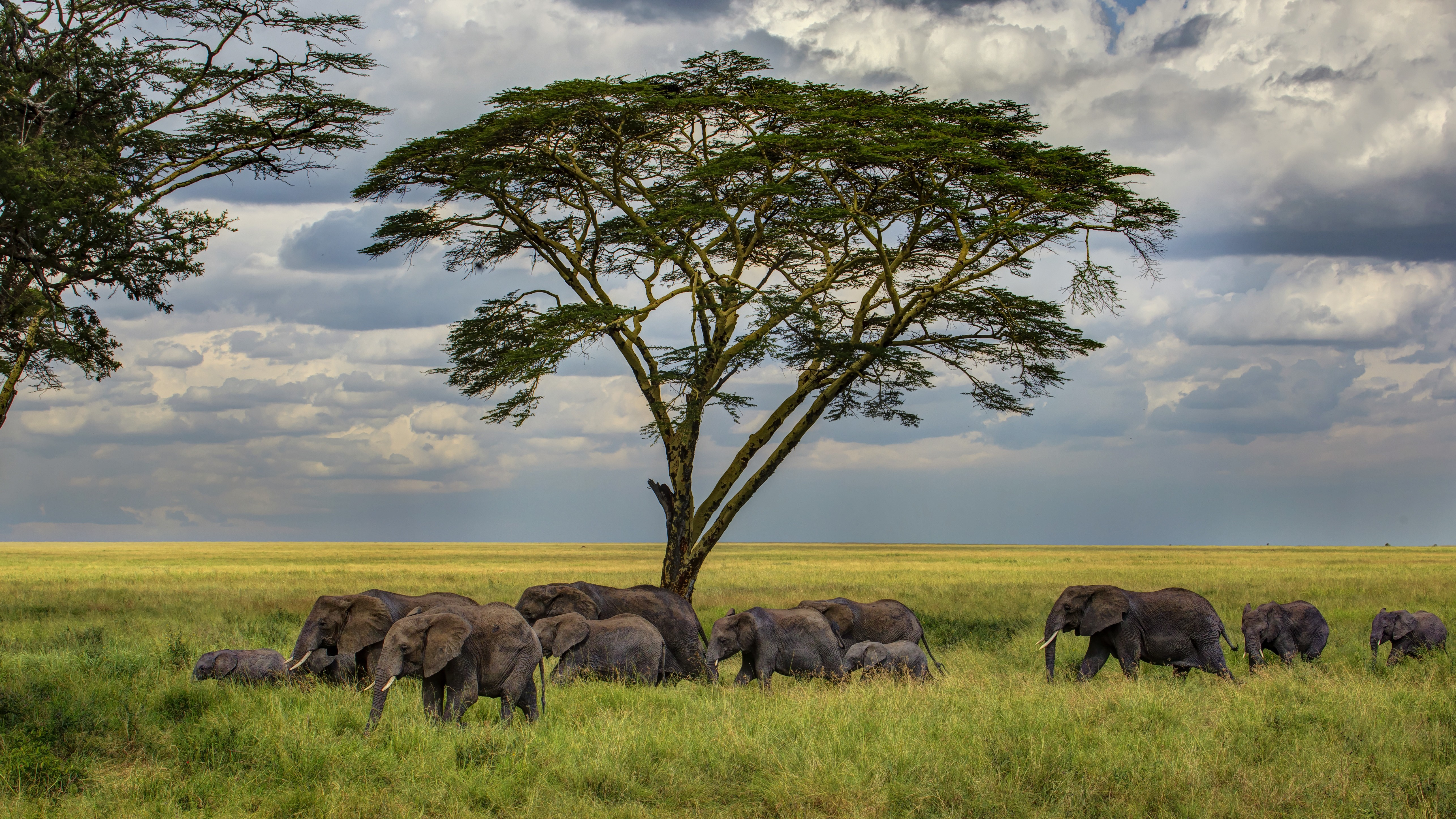 Savana Hd Elephant Wallpaper Animals Wild Elephant Savanna
