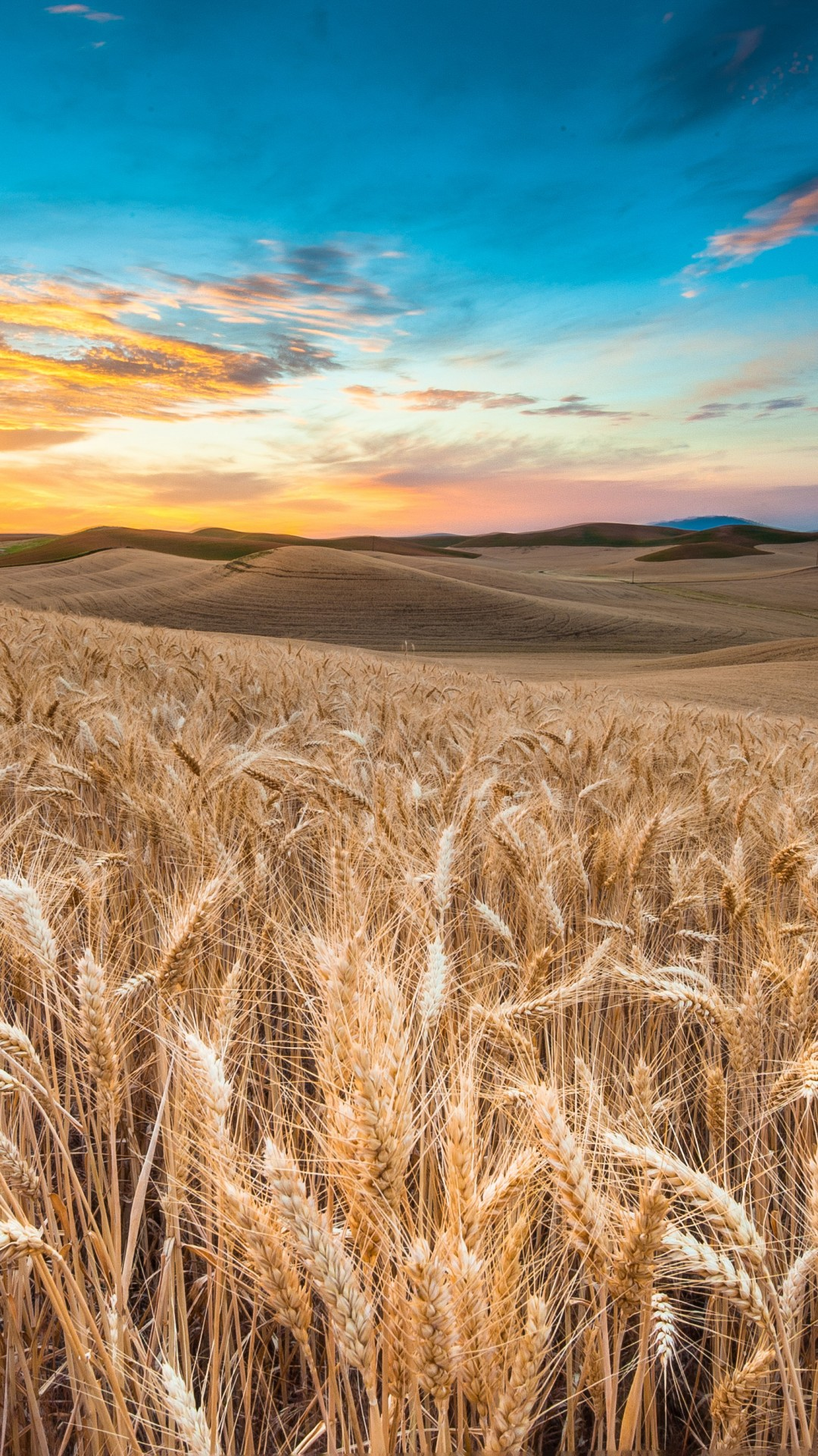 1920x1080 Wallpaper With Quoteds Wallpaper Field 4k Hd Wallpaper Wheat Spikes Sky