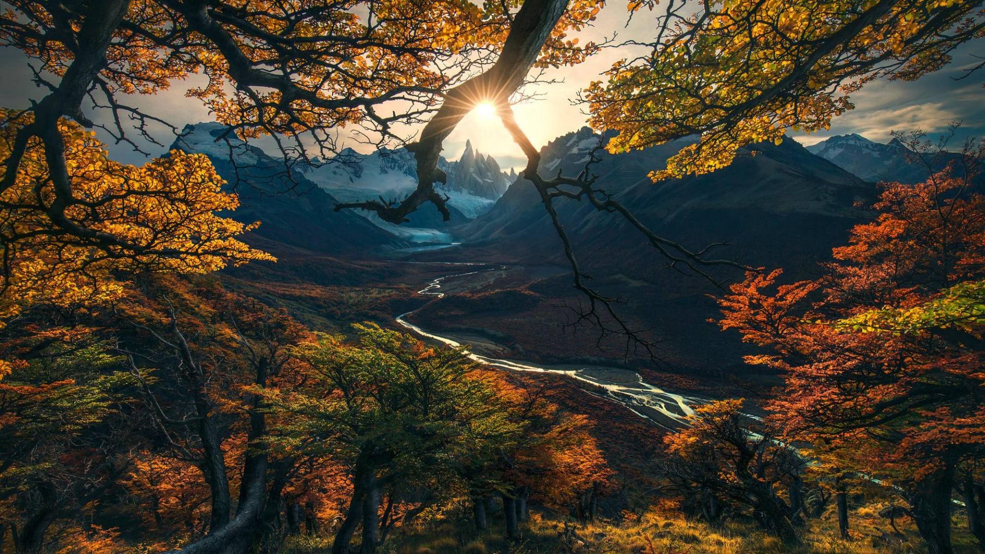 1920x1080 Fall Hd Wallpaper Wallpaper Forest Tree Mountains Autumn Hd Nature 15808