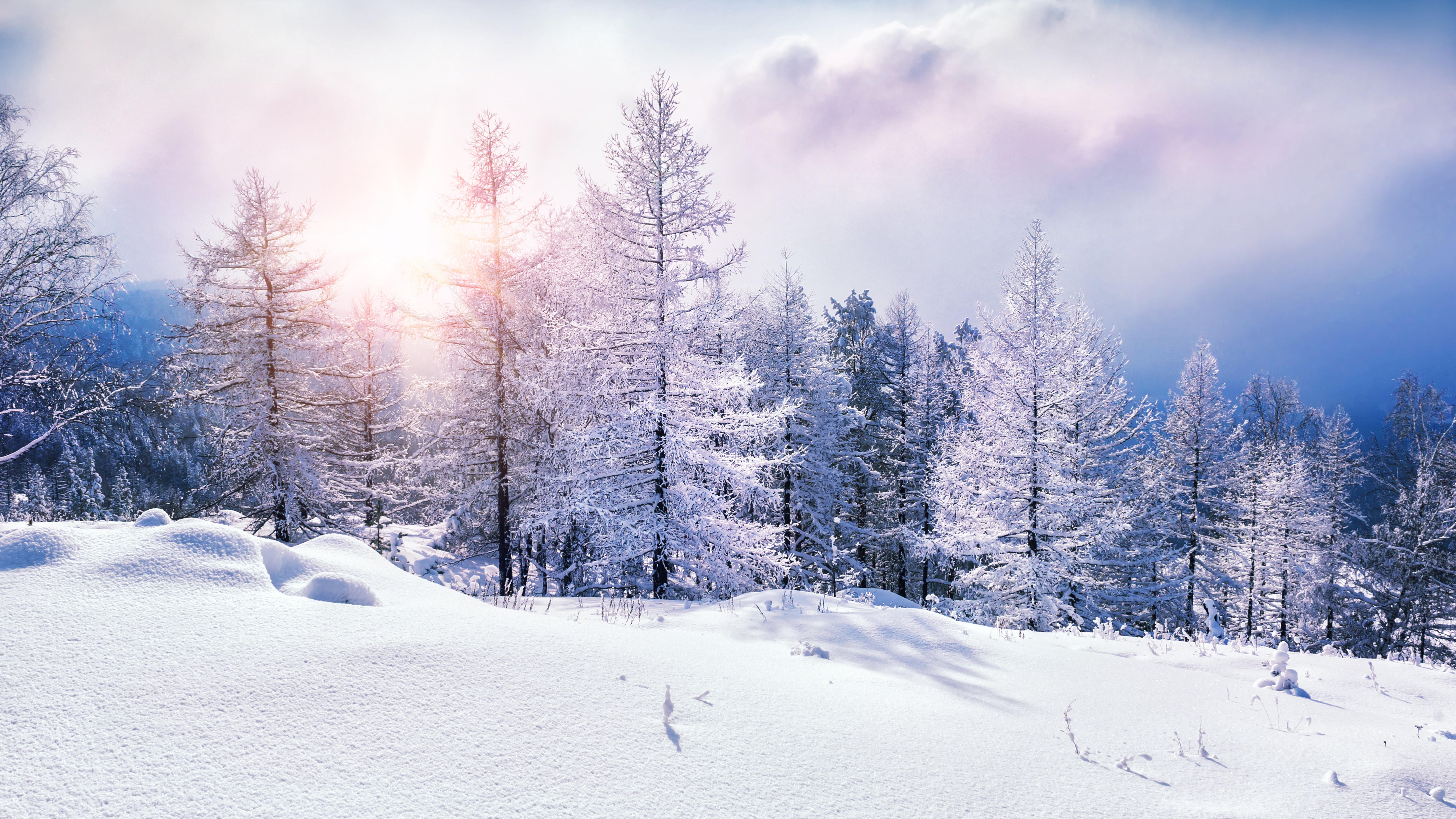 3d Moon Night Wallpaper Wallpaper Forest Snow Winter Clouds 8k Nature 17356