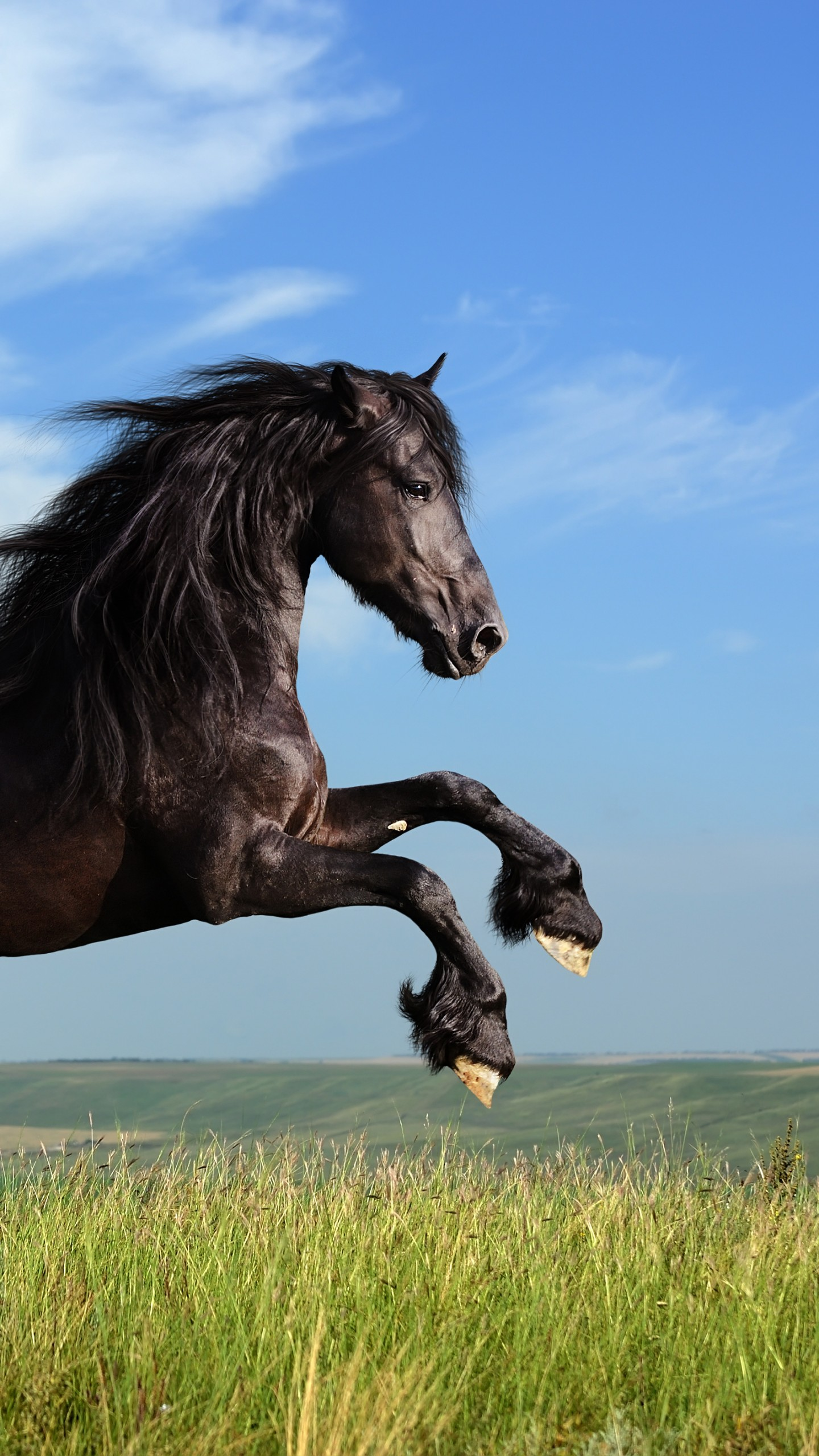 Cute Girly Wallpaper Quotes Wallpaper Horse Gallop Meadow Sky Animals 4774