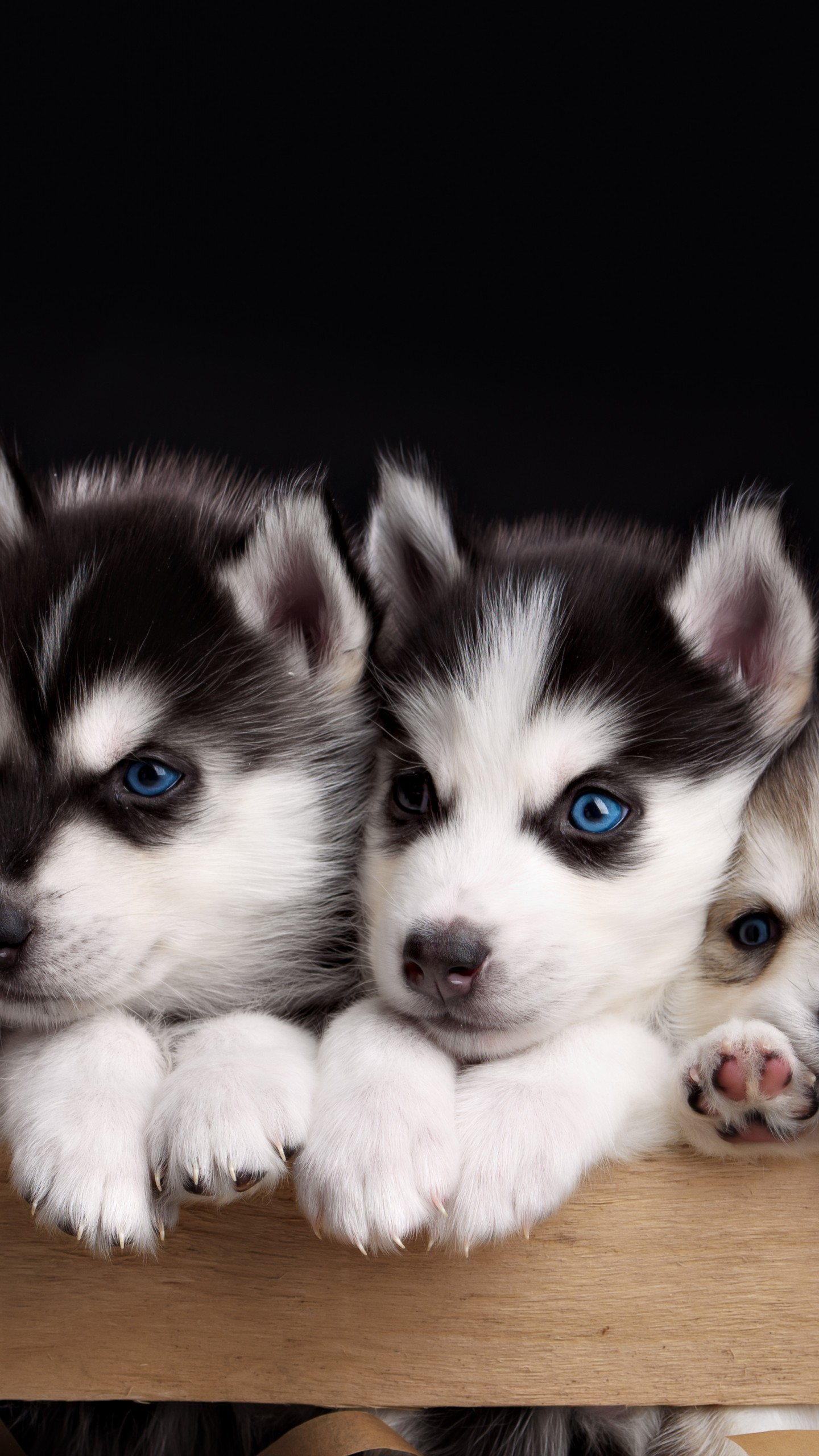 Cute Pet Animals Hd Wallpapers Wallpaper Husky Puppy Cute Animals 4k Animals 17835