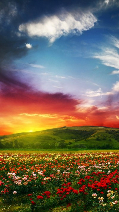 Wallpaper India, 5k, 4k wallpaper, Valley of Flowers, Meadows, roses, sunset, clouds, Nature #5310