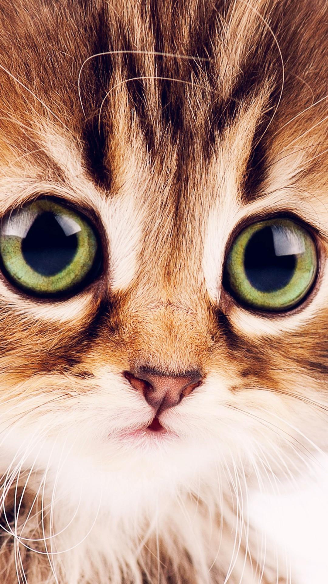 Cute Cat Hd Wallpaper Download Wallpaper Kitten Cute Funny Animals 4k Animals 16151