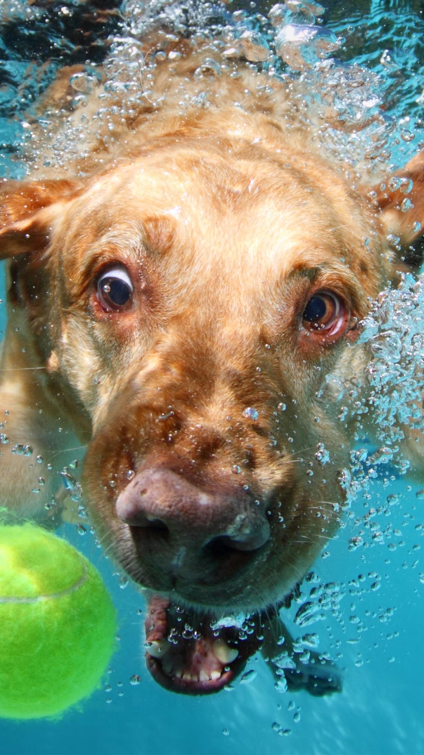 Field Wallpaper Hd Wallpaper Labrador Dog Underwater Cute Animals Funny