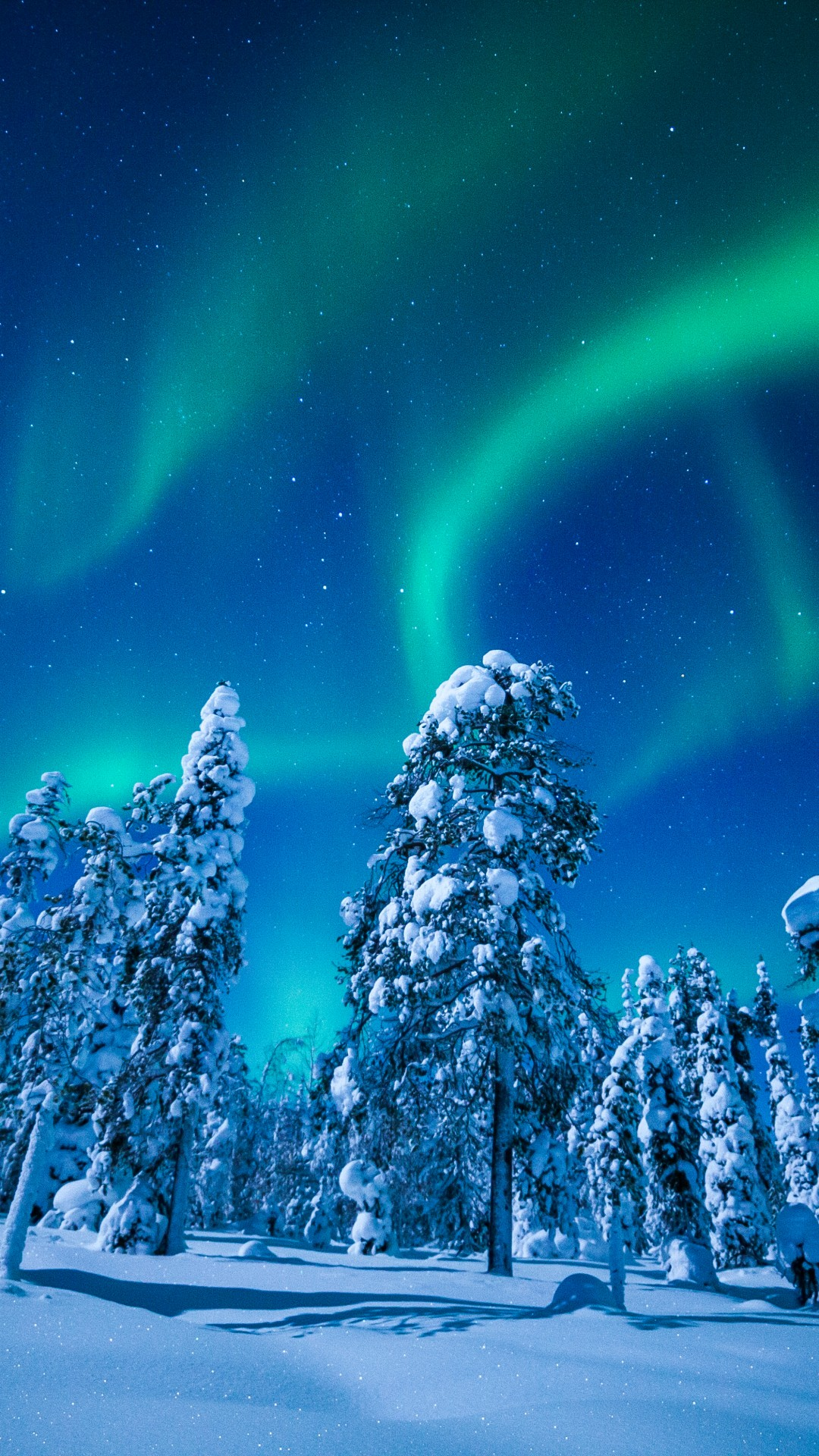 Cute Wallpapers For Girls Pc Wallpaper Lapland Finland Winter Snow Tree Night