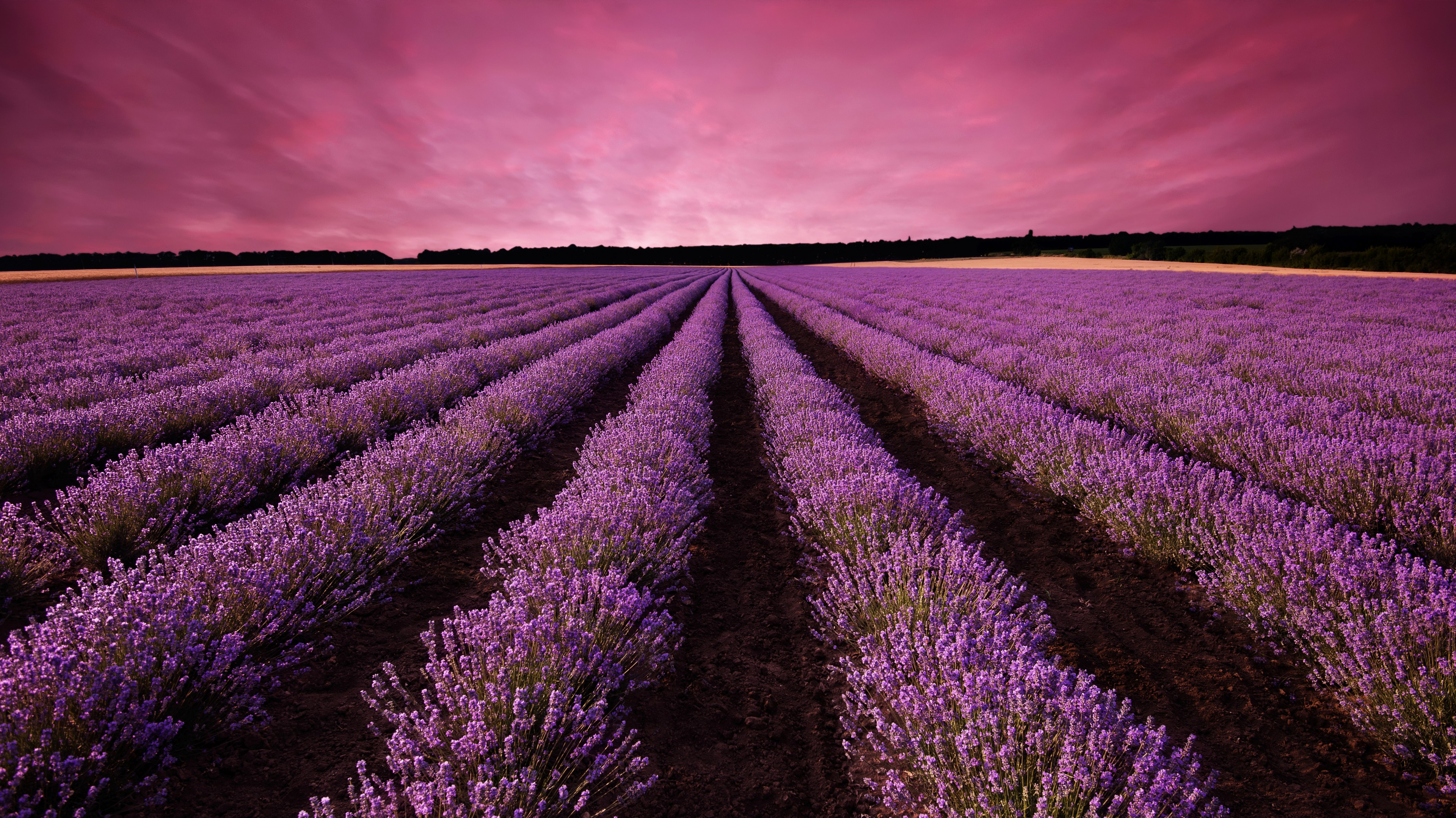 Ice Cream Wallpapers With Quotes Wallpaper Lavender Field Sky Mountain Provence France