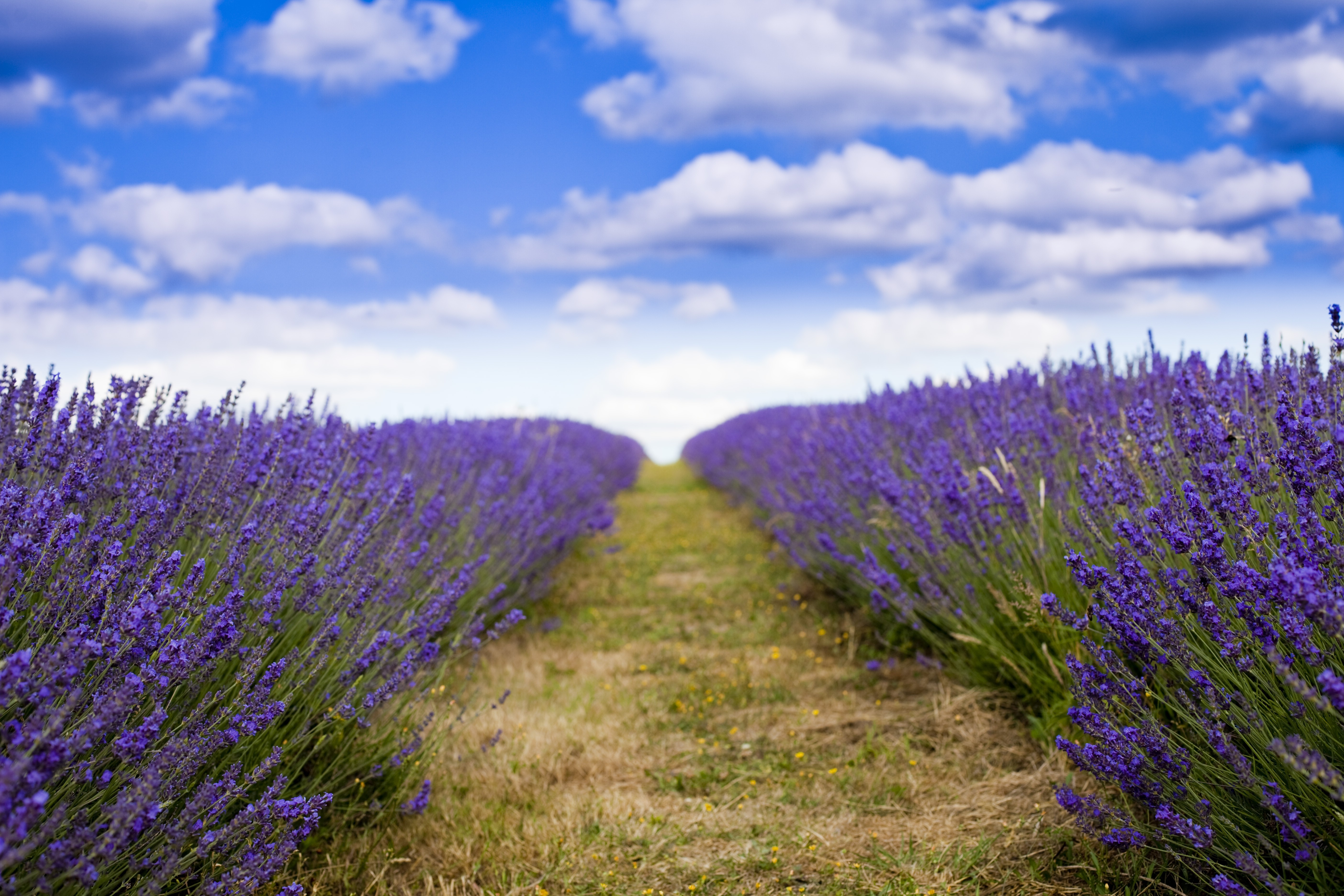 Ice Cream Wallpapers With Quotes Wallpaper Lavender 5k 4k Wallpaper 8k Field Flowers