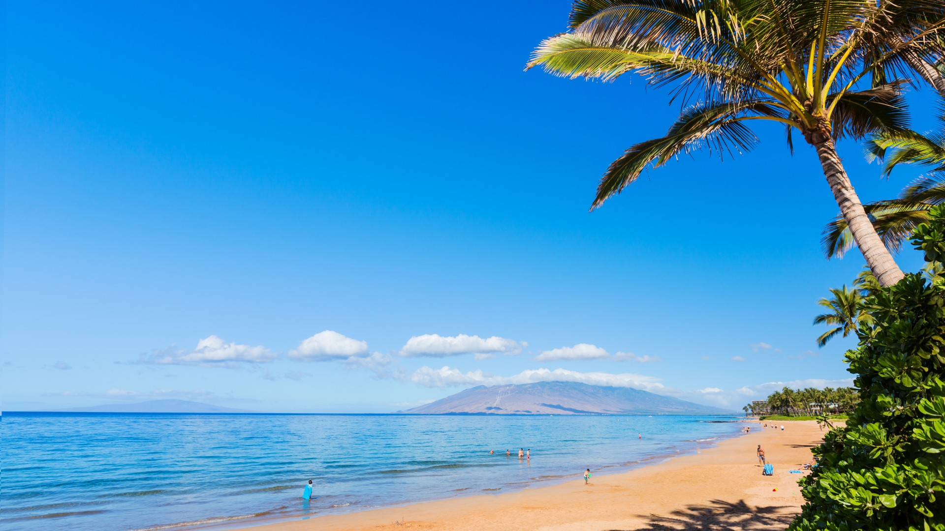 Download Cool Quotes Wallpapers Wallpaper Maui Hawaii Beach Ocean Coast Palm Sky 5k