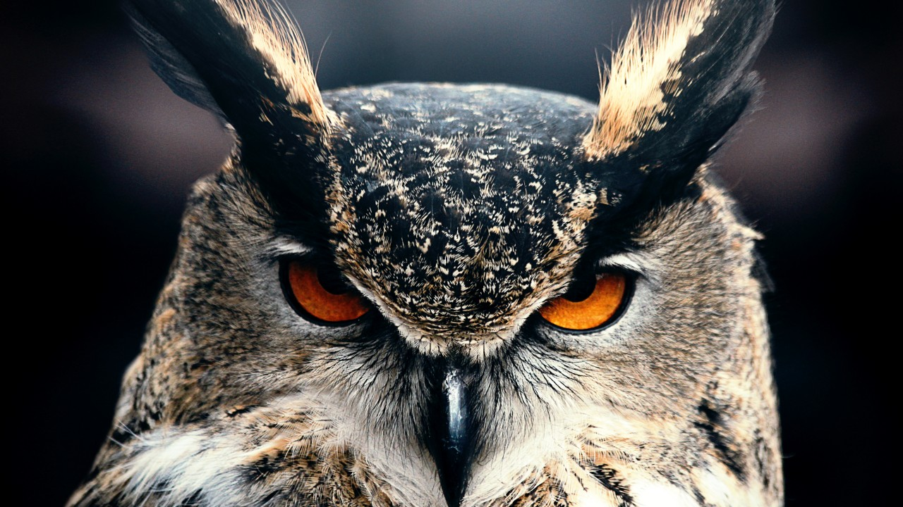 Cool Quotes Wallpaper Iphone Wallpaper Owl 4k Hd Wallpaper Eyes Wild Nature Gray