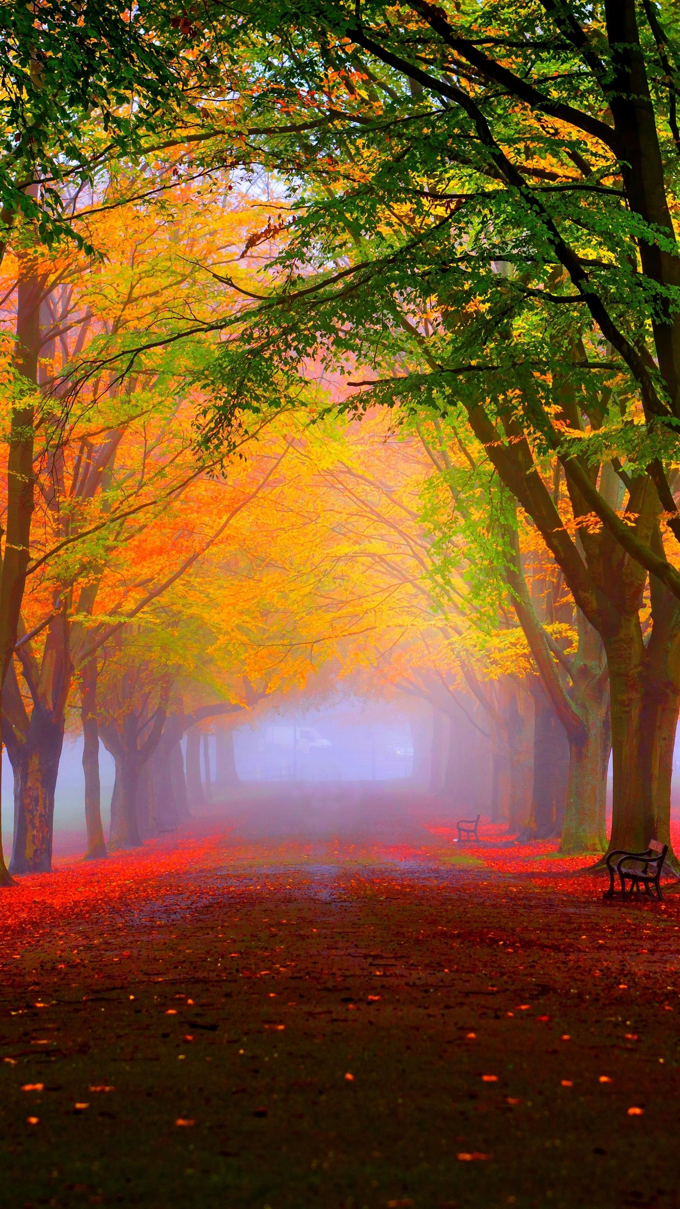 Fall Leaves Hd Desktop Wallpaper Wallpaper Park 5k 4k Wallpaper 8k Autumn Beautiful