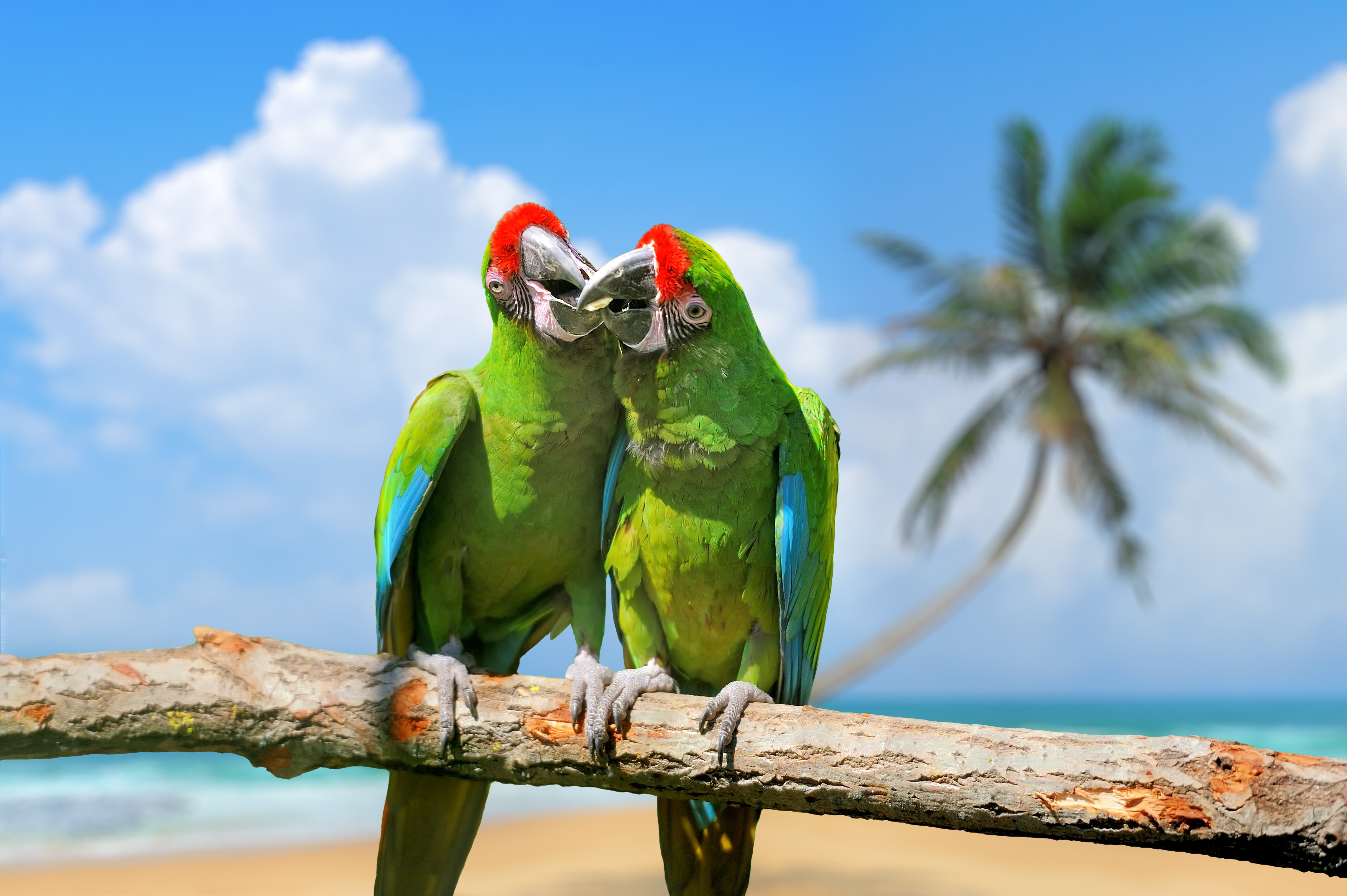 Into The Wild Quotes Wallpaper Wallpaper Parrot Plumage Branch Exotic Birds Green