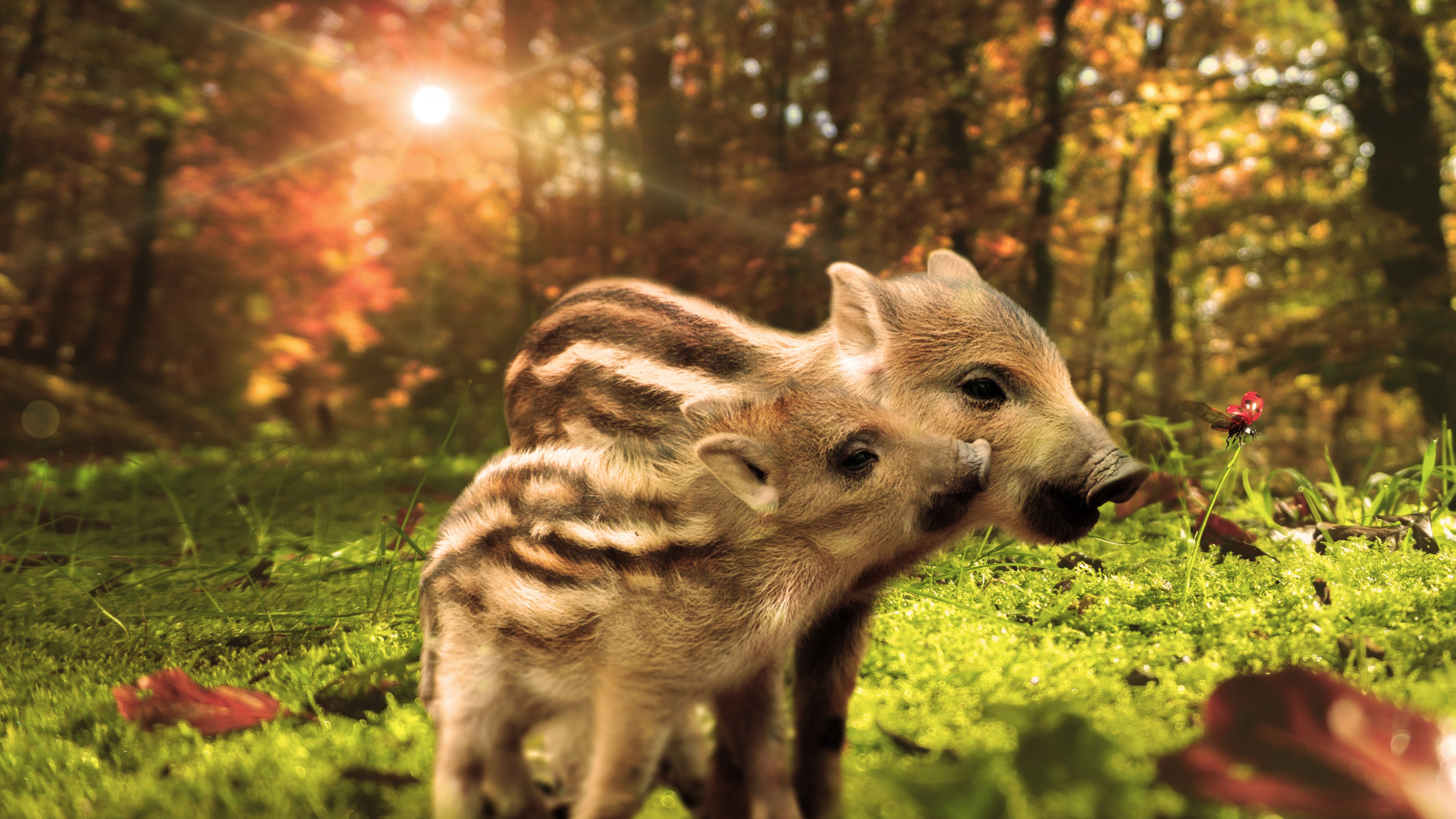 Wallpapers 2560x1440 Cars Wallpaper Pig Funny Animals 7k Animals 18889