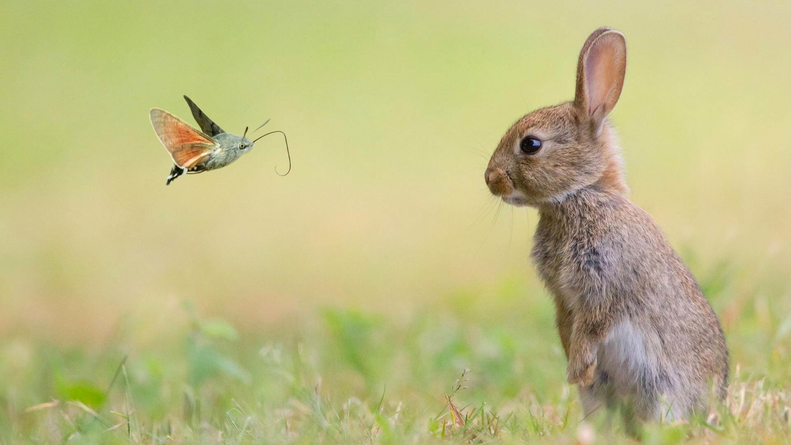 Cute Wallpapers With Quotes Hd Wallpaper Rabbit Cute Animals Butterfly 4k Animals 15980
