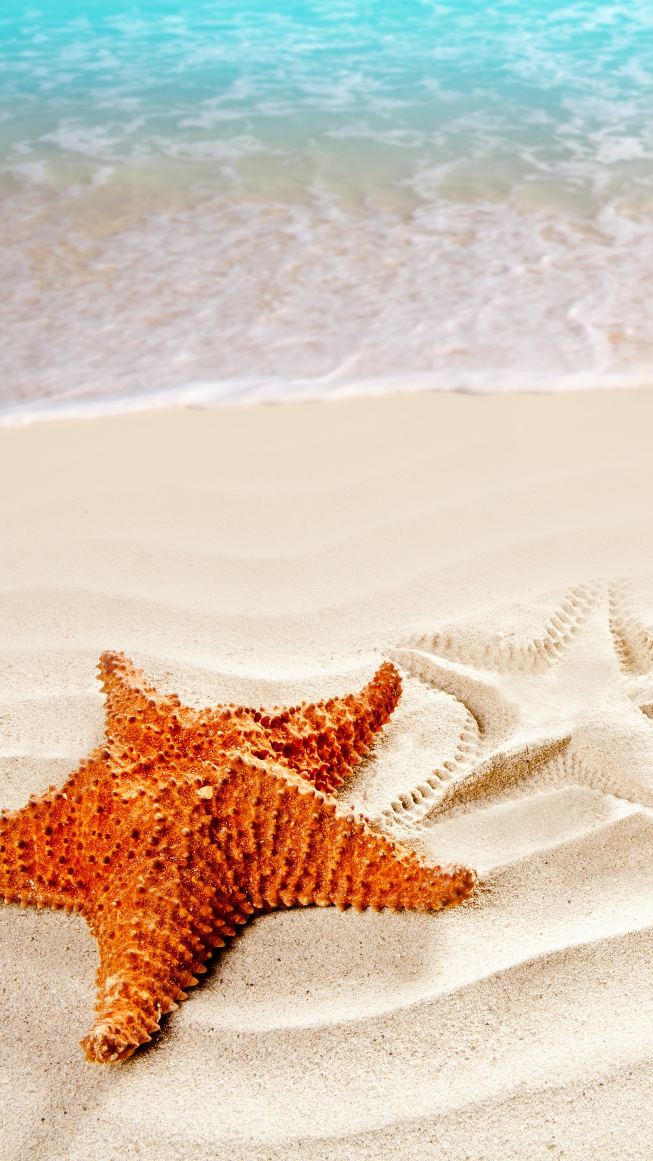 Love U Wallpapers With Quotes Wallpaper Sea 5k 4k Wallpaper Ocean Starfish Shore