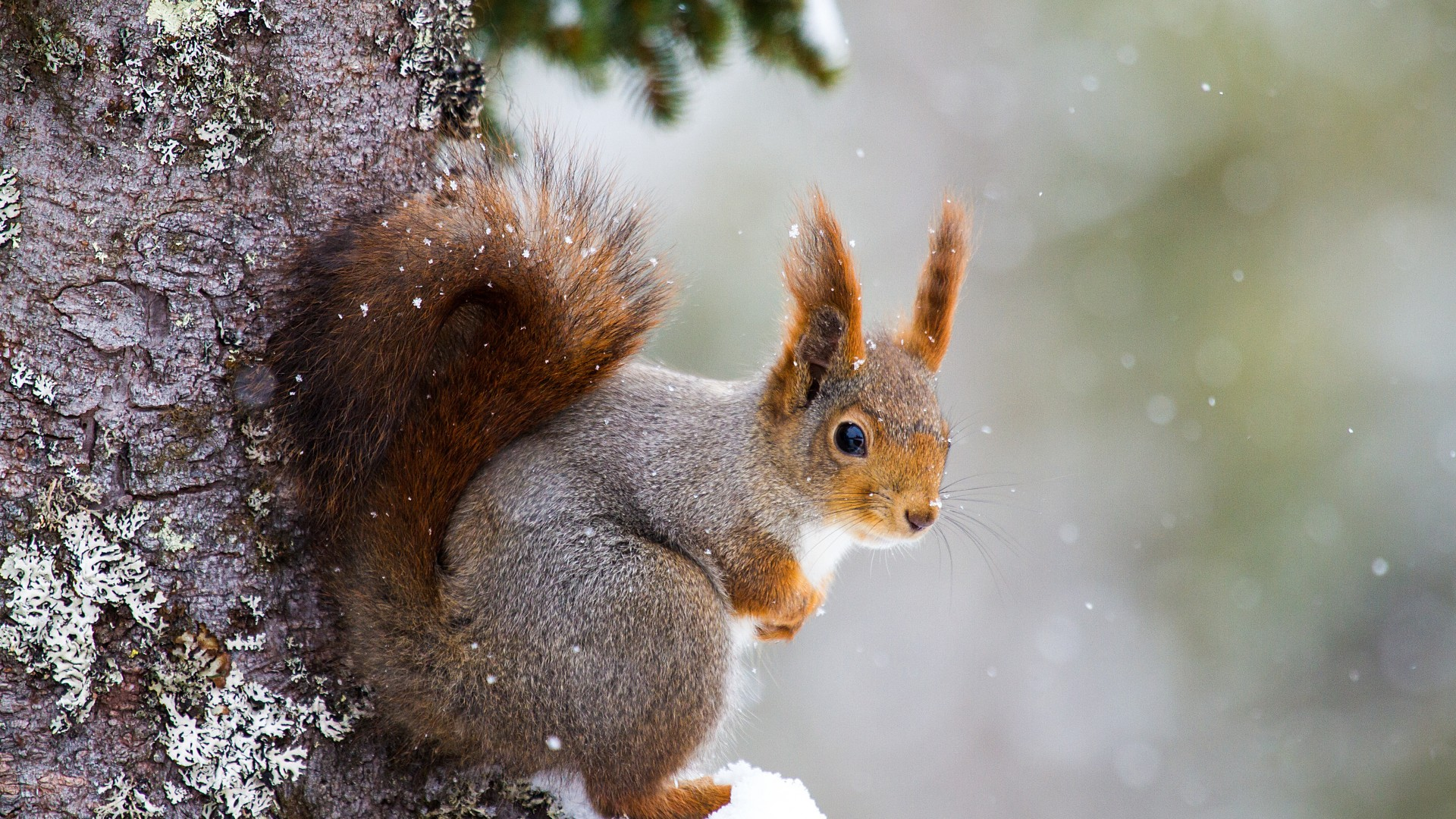 Cute Pets Wallpapers Hd Wallpaper Squirrel Cute Animals Winter 5k Animals 17350