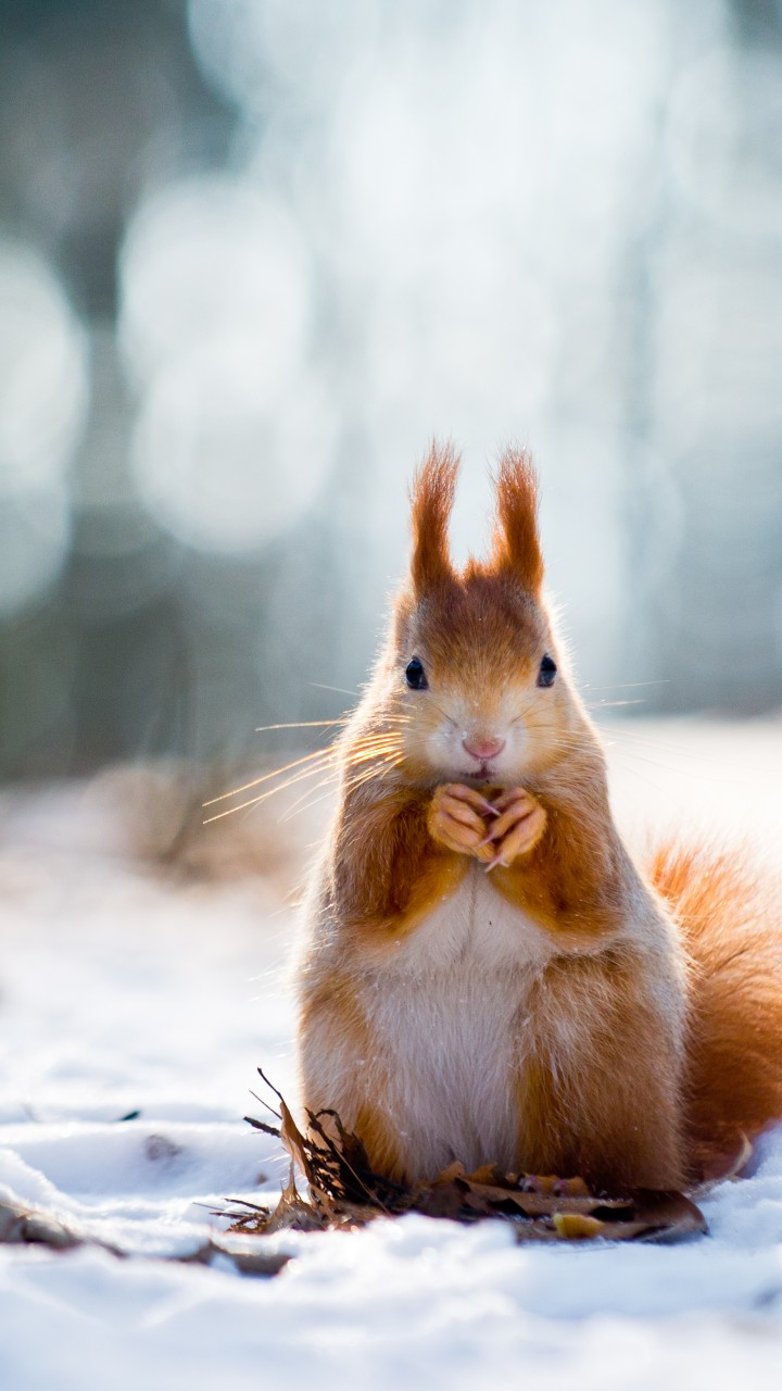 Hd Wallpaper Of Best Quotes Wallpaper Squirrel Cute Animals Snow Winter 4k