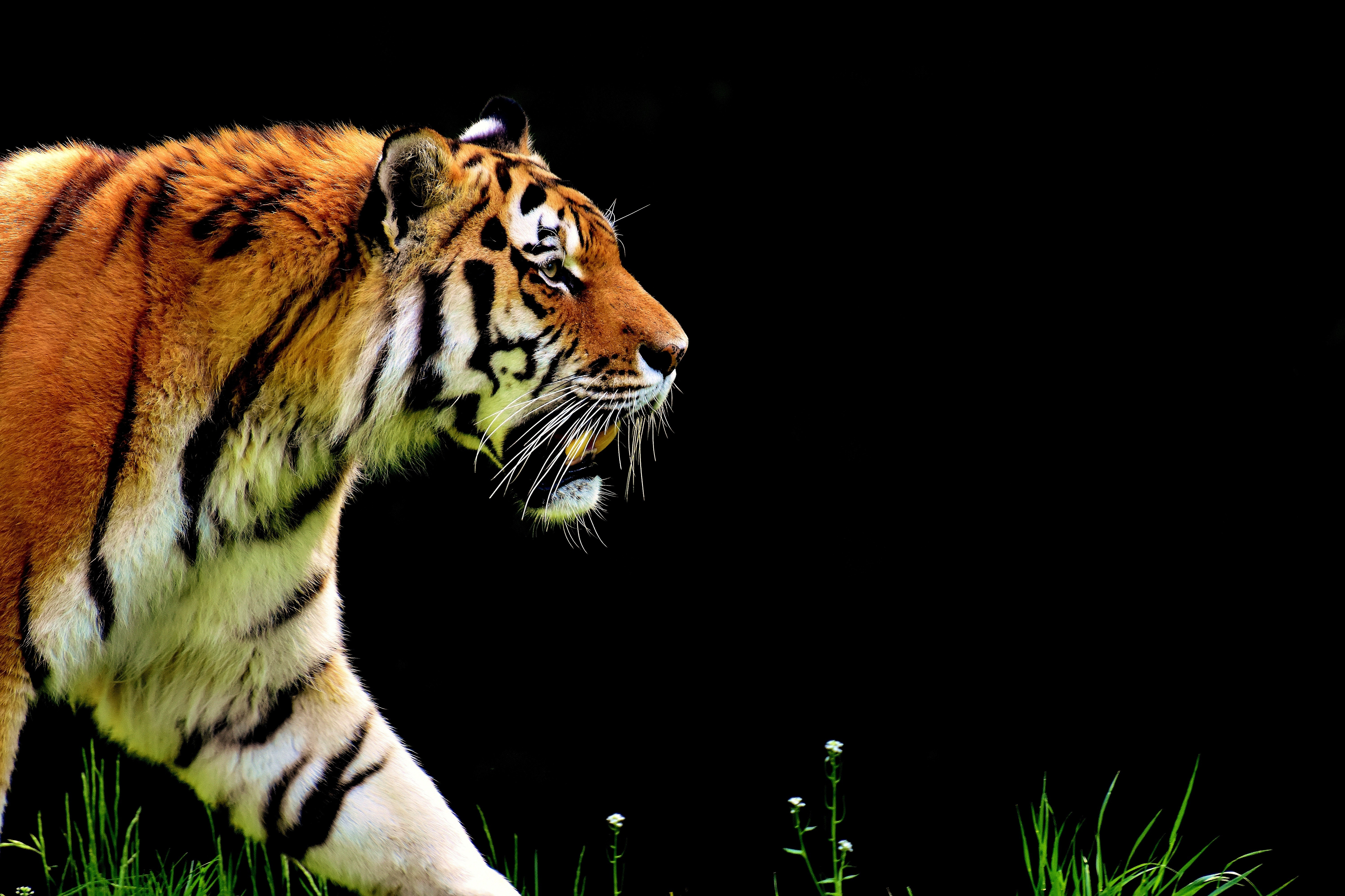 Military Quotes Iphone Wallpaper Wallpaper Tiger 4k Animals 15041
