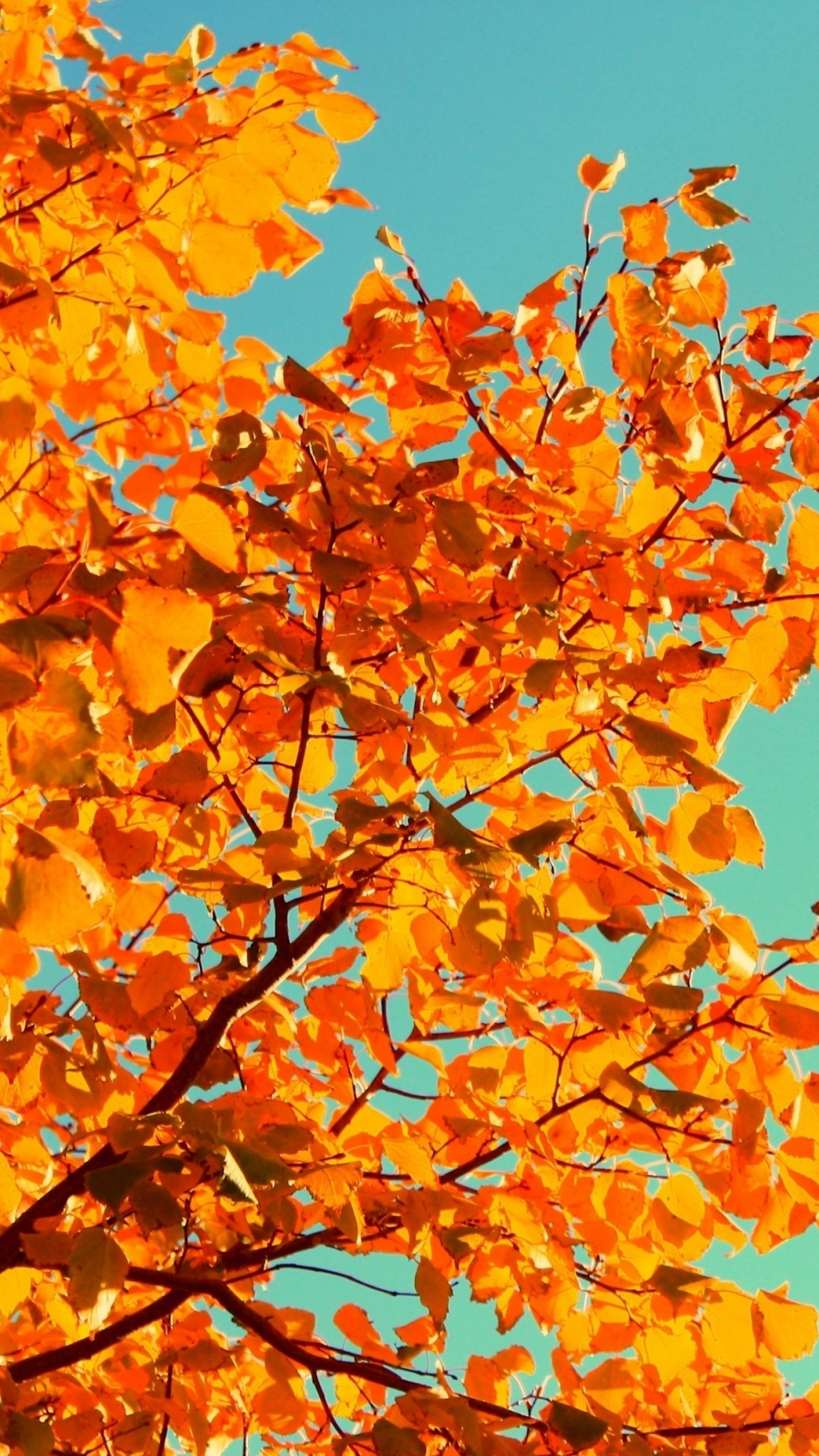 Fall Leaves Hd Desktop Wallpaper Wallpaper Tree 5k 4k Wallpaper Sky Autumn Yellow