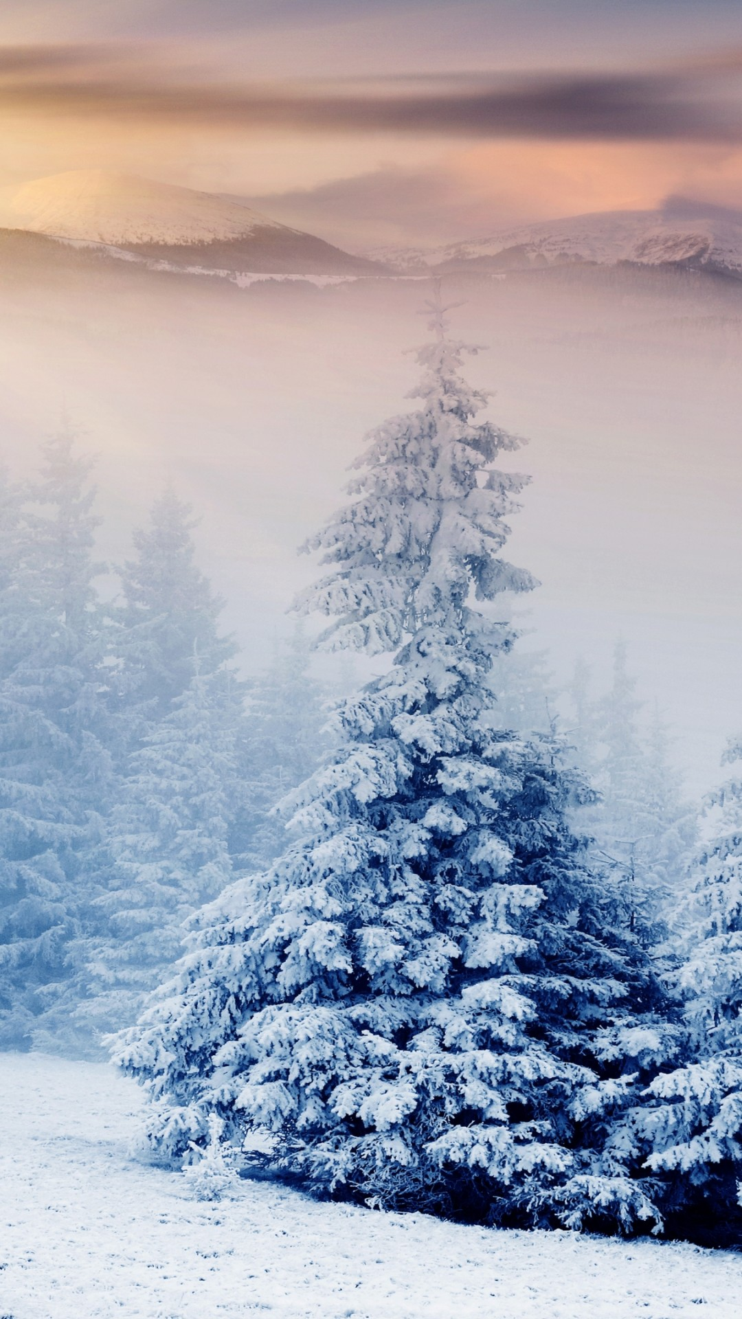 Beautiful Wallpaper With Quotes Free Download Wallpaper Trees 5k 4k Wallpaper Pines Mountains Snow