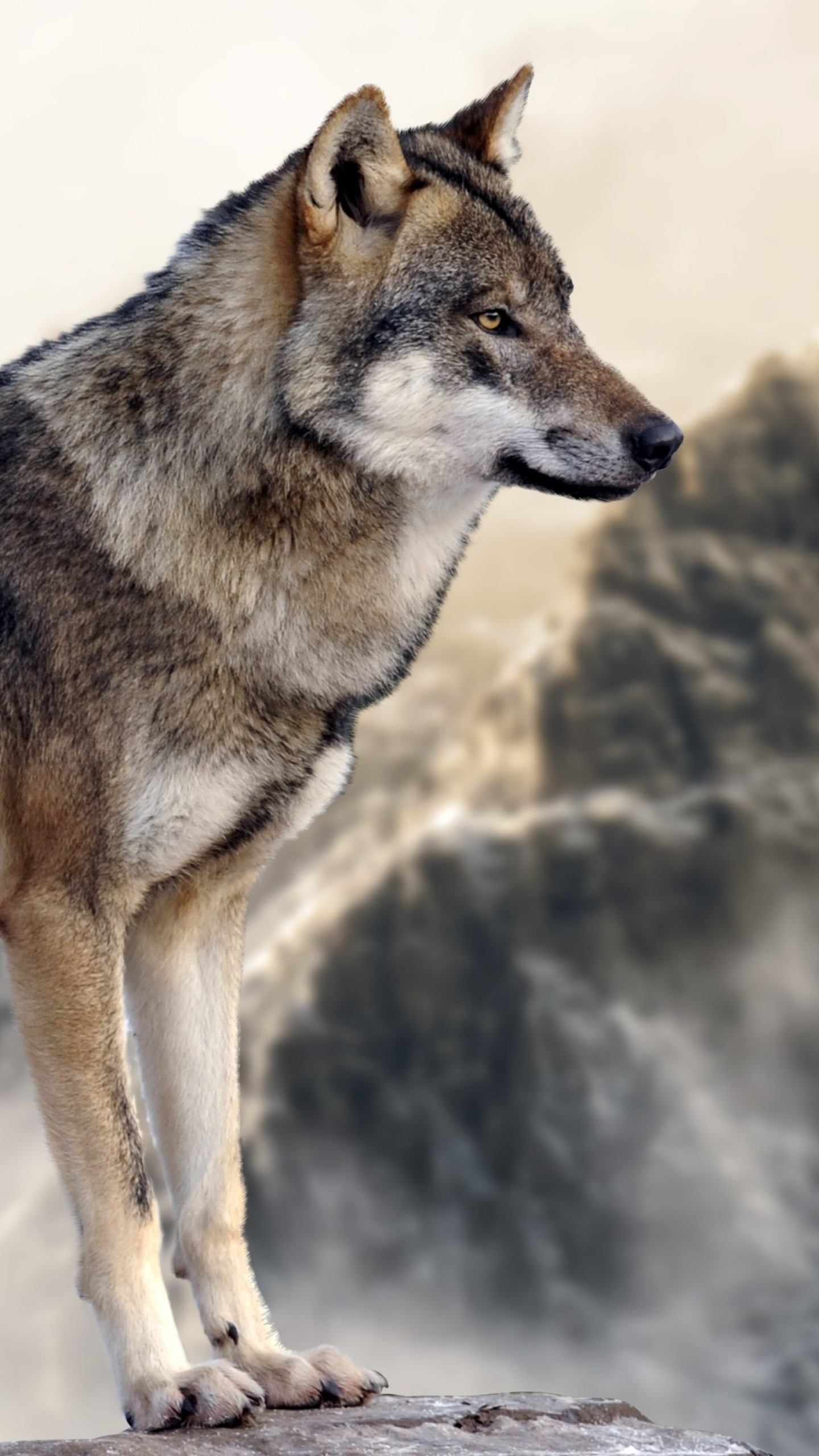 Black And Gray Wallpaper Wallpaper Wolf Mountain 4k Animals 16064