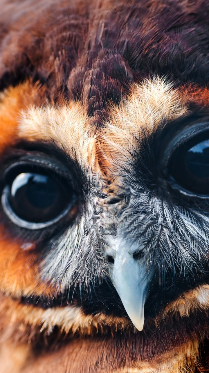 Funny Hd Animal Wallpapers Обои сова 5k 4k милые глаза Owl 5k 4k Wallpaper
