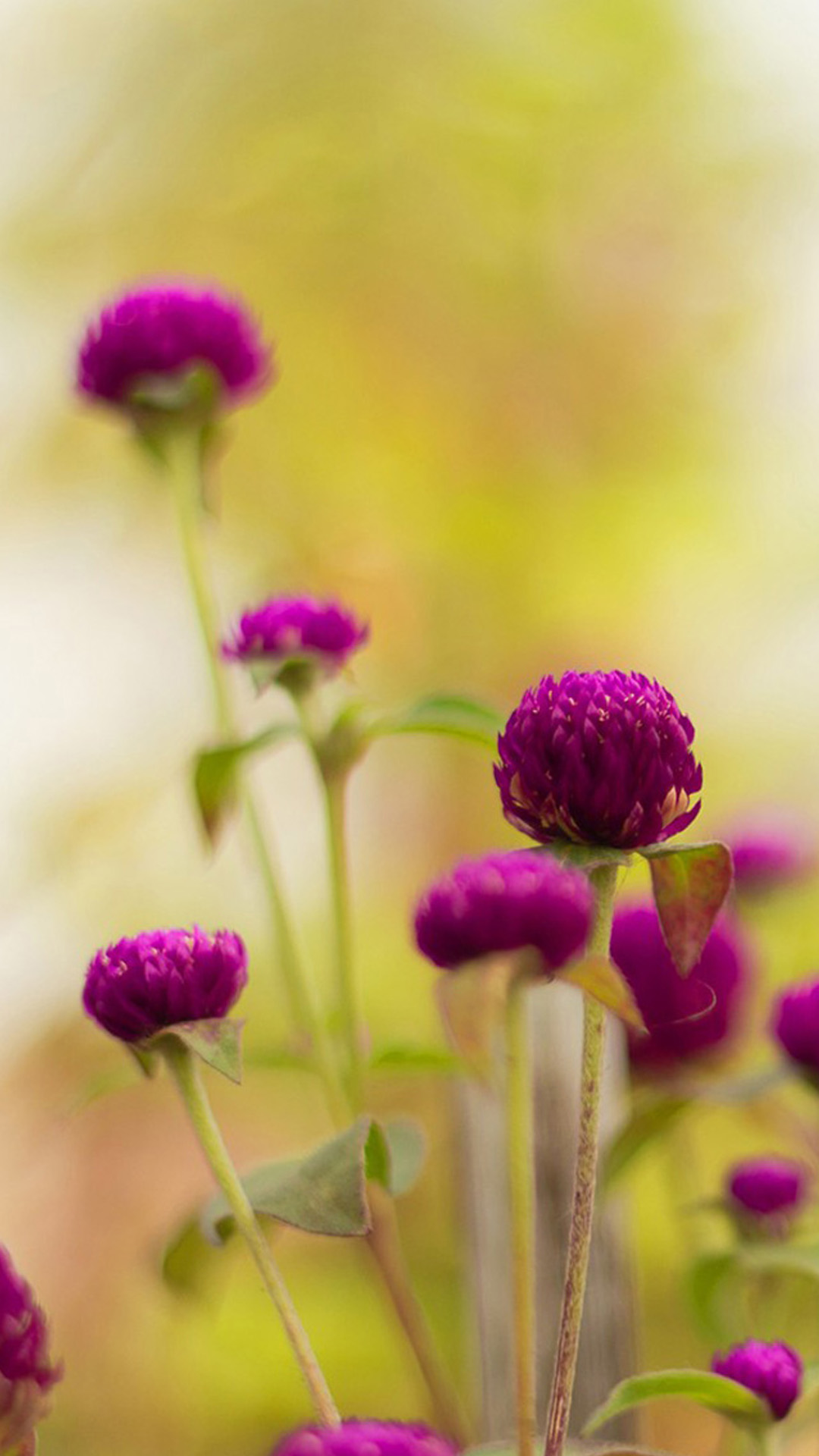 Animated Mobile Phone Wallpapers Flowers Colorful Purple Flower Hd Wallpaper Iphone 6 Plus