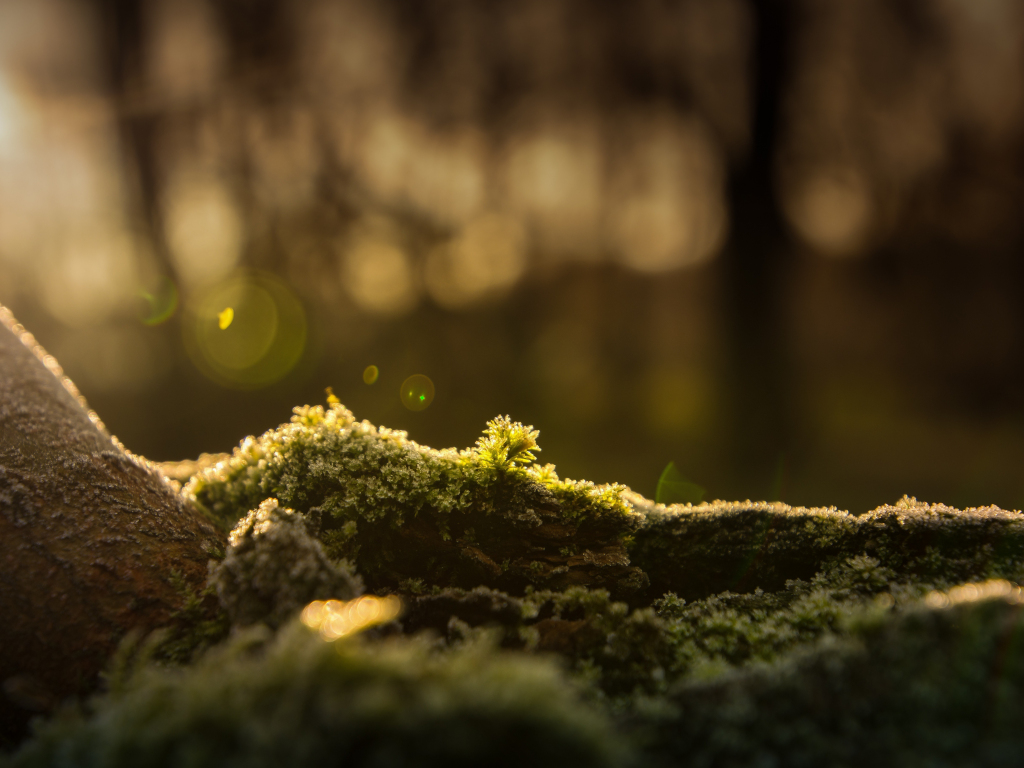 Wallpaper 4k Samsung Galaxy S8 Girls Desktop Wallpaper Forest Bokeh Moss Blur Hd Image