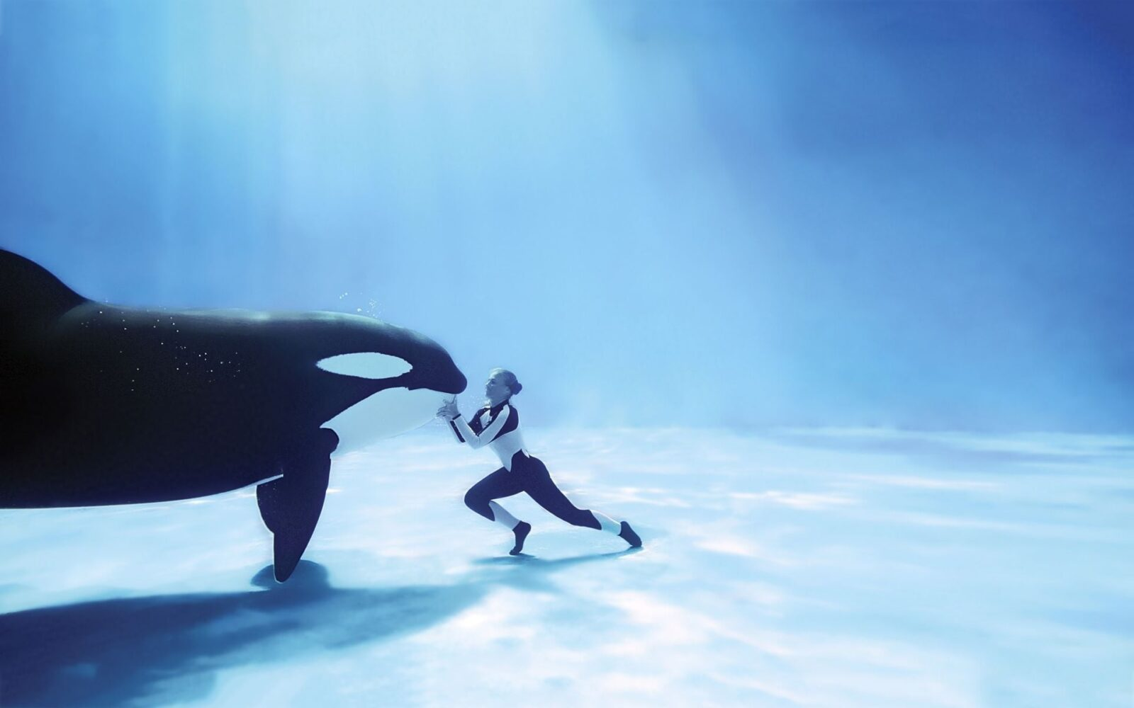 All Anime In One Wallpaper Orca Killer Whale Hd Wallpapers Download