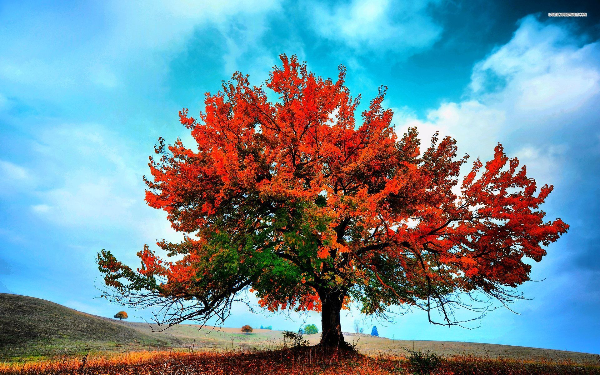 Pretty Fall Iphone Wallpapers 193 Rbol Rojo Hermoso Oto 241 O Fondos De Pantalla 193 Rbol Rojo