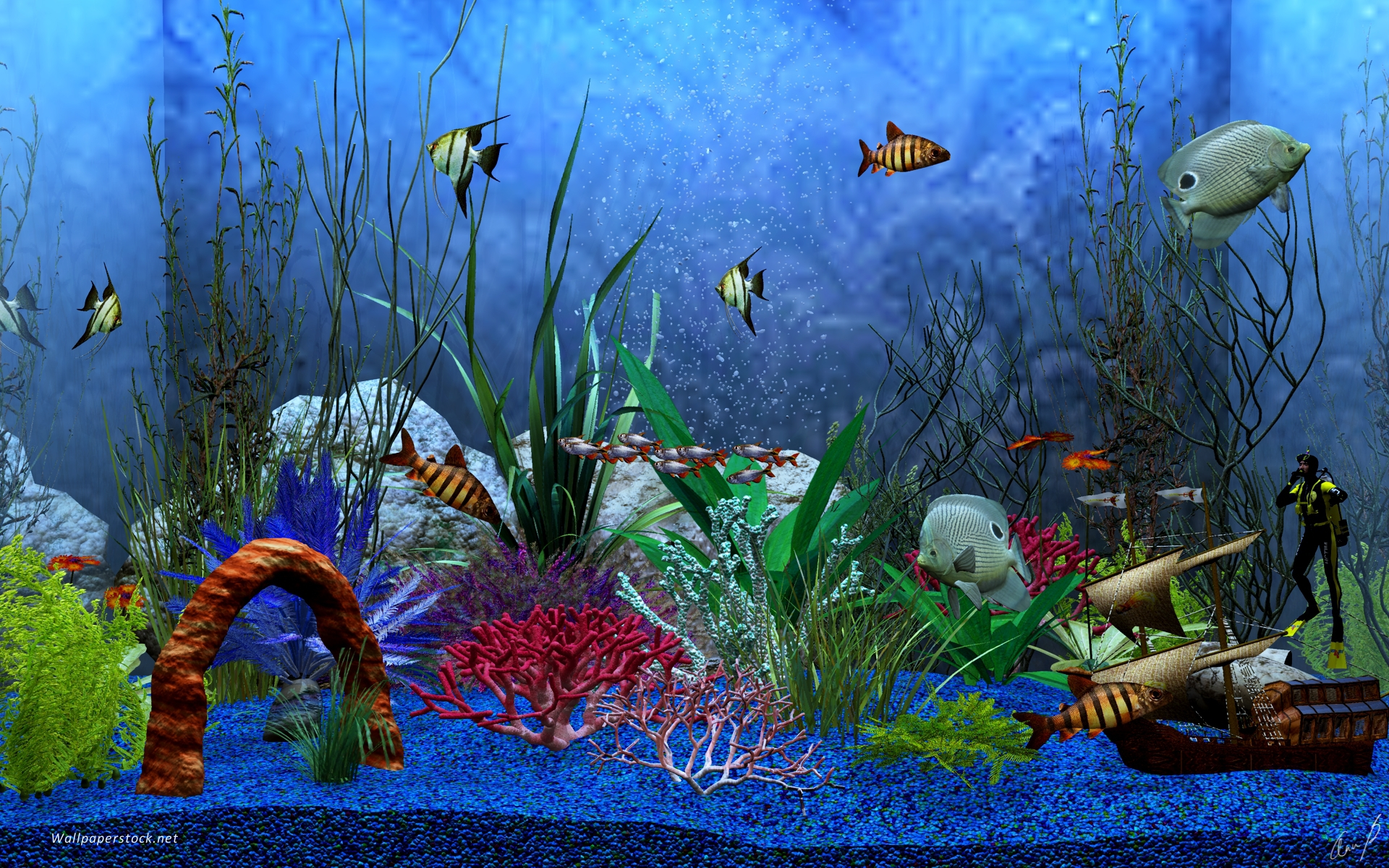 Koi Fish 3d Animated Wallpaper Aquarium View Wallpapers Aquarium View Stock Photos