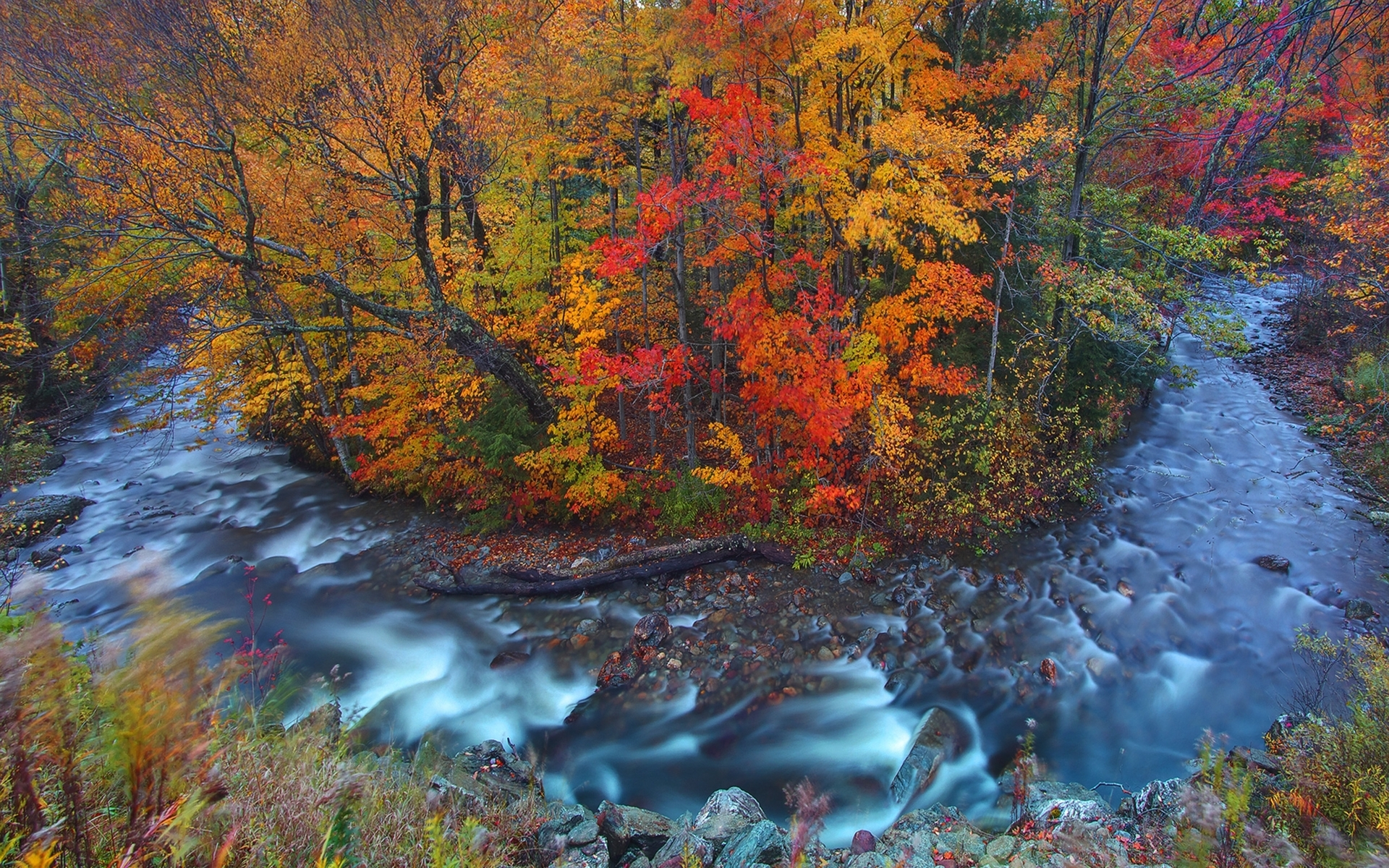 Fall Mountain Scenes Wallpaper Autumn Forest Amp Wild Stream Wallpapers Autumn Forest